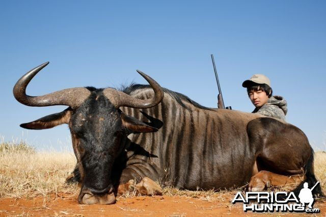 Blue Wildebeest Hartzview 2012