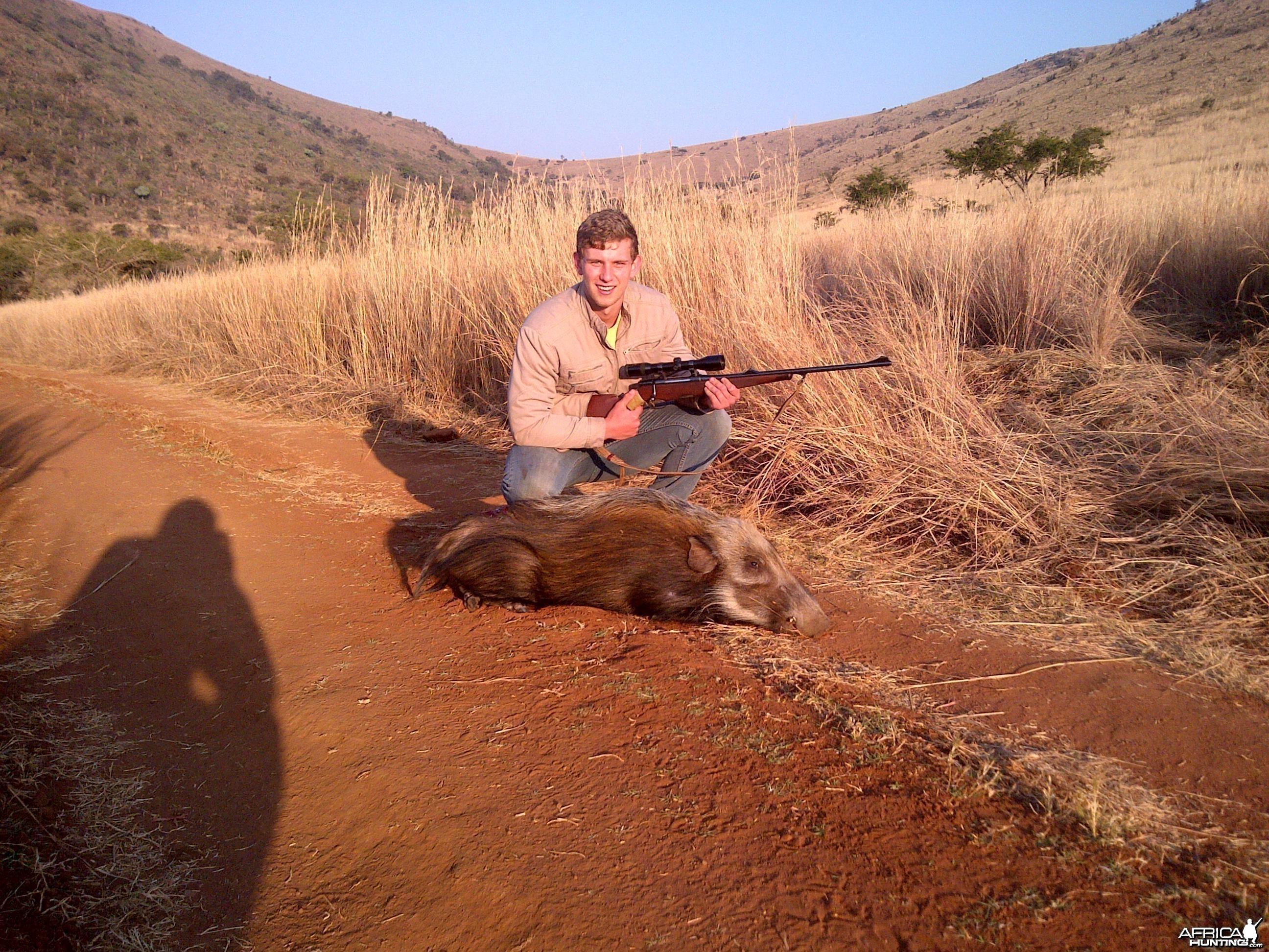 bush pig hunt