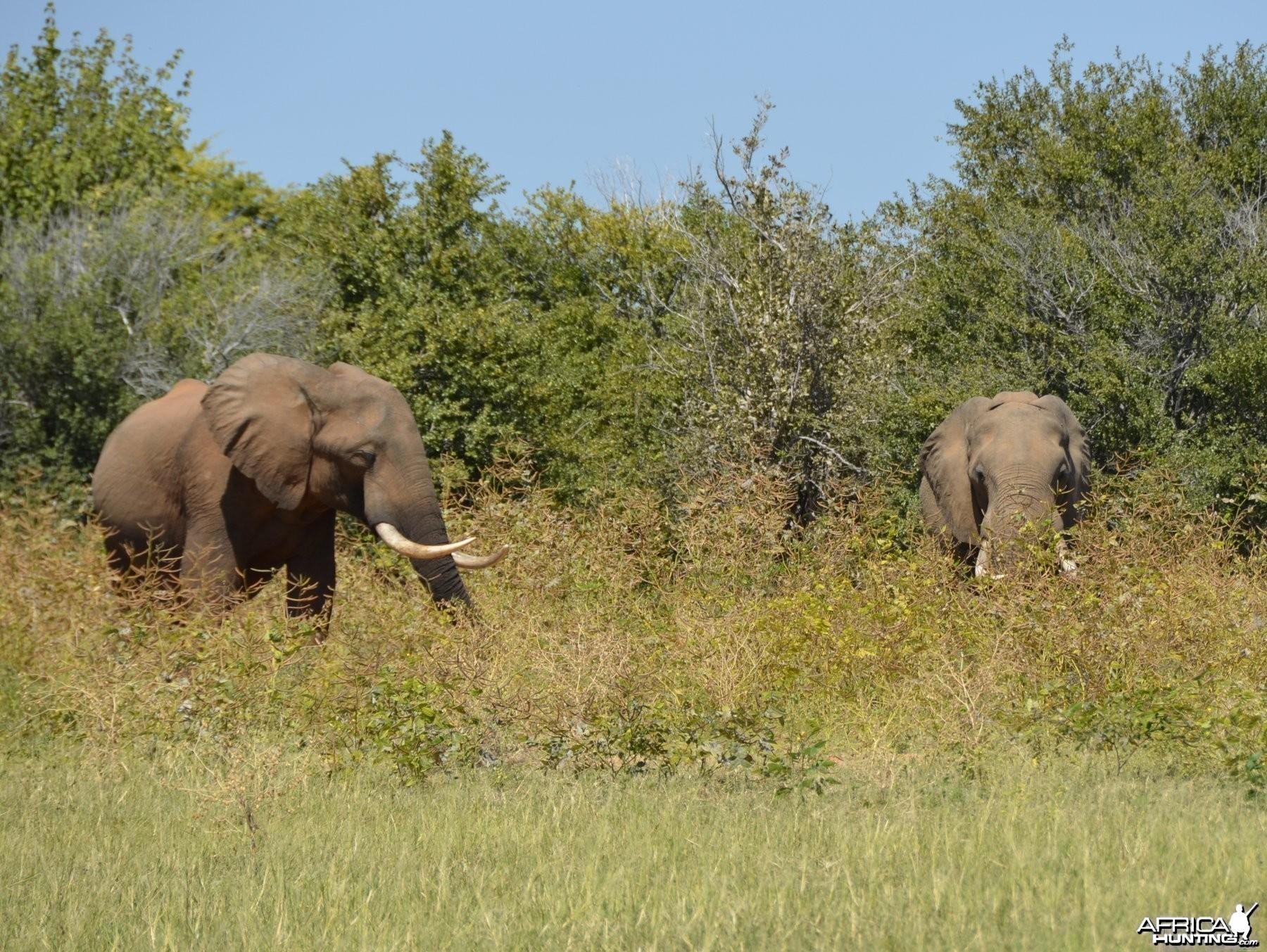 Ele Bulls, Omay North, Zimbabwe