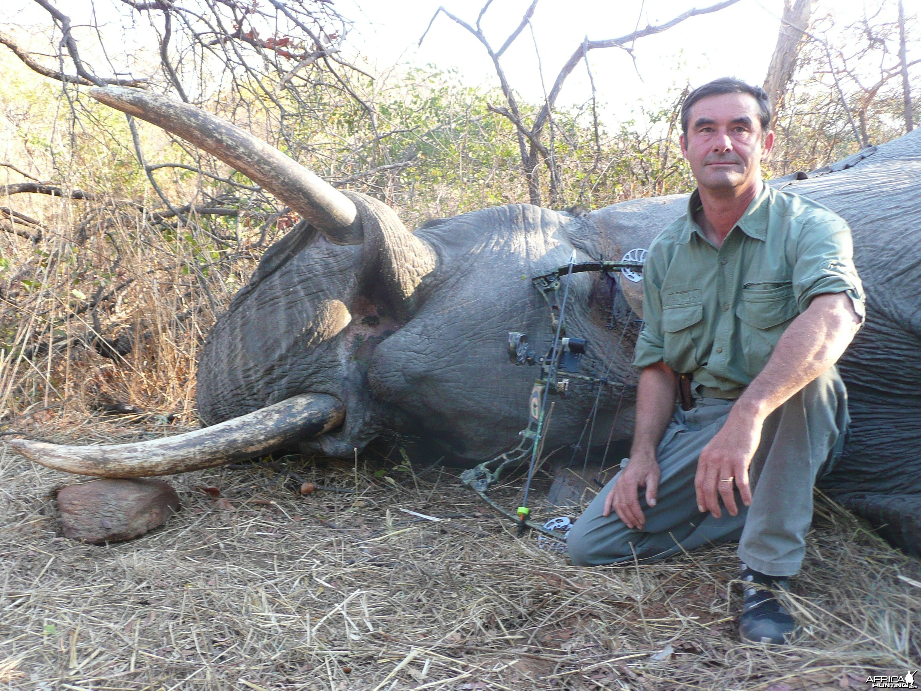 bowhunted elephant