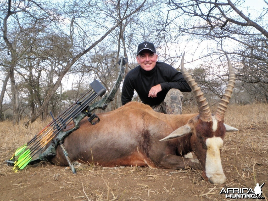 Blesbok taken with bow