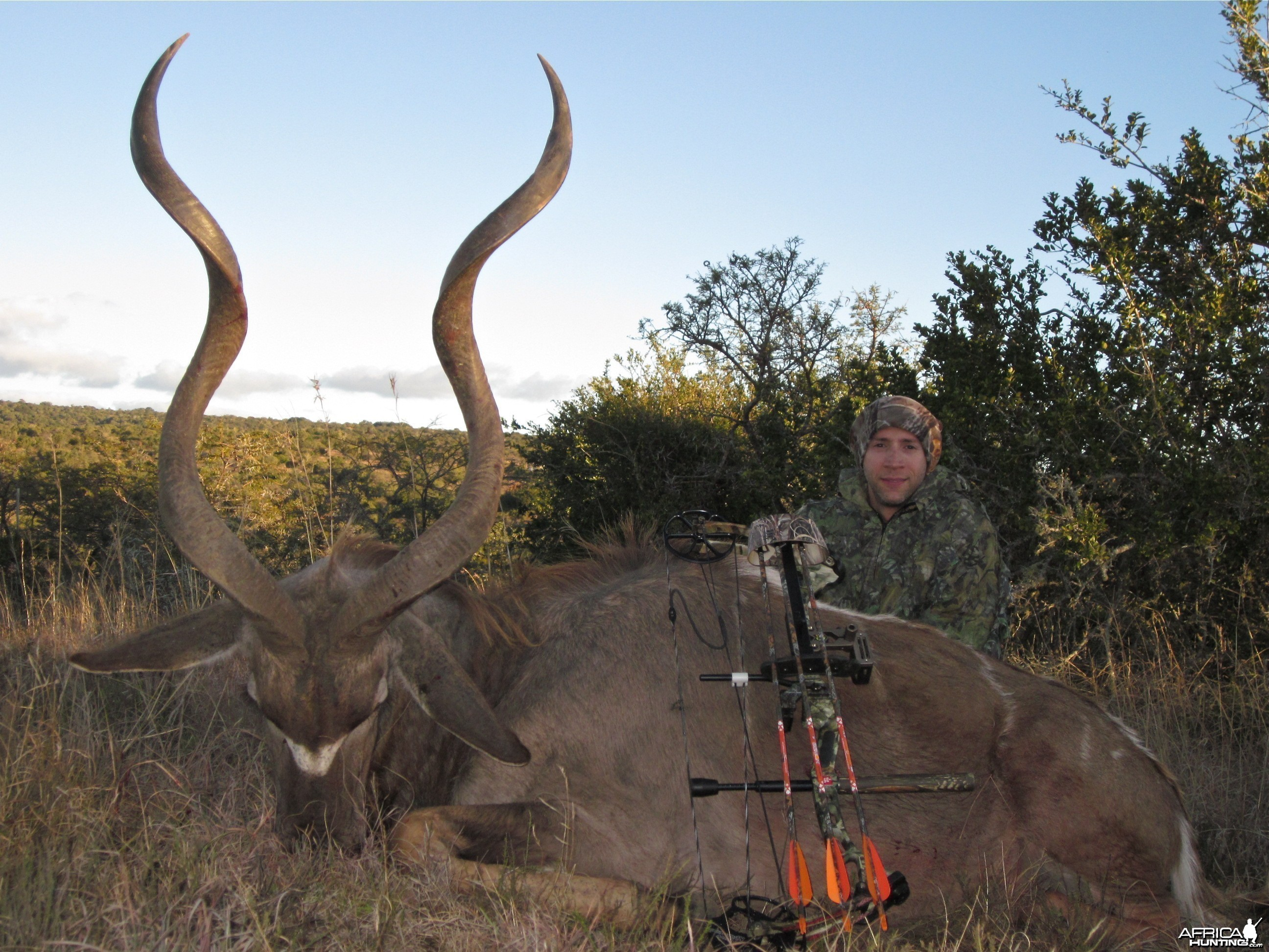 Eastern Cape Kudu