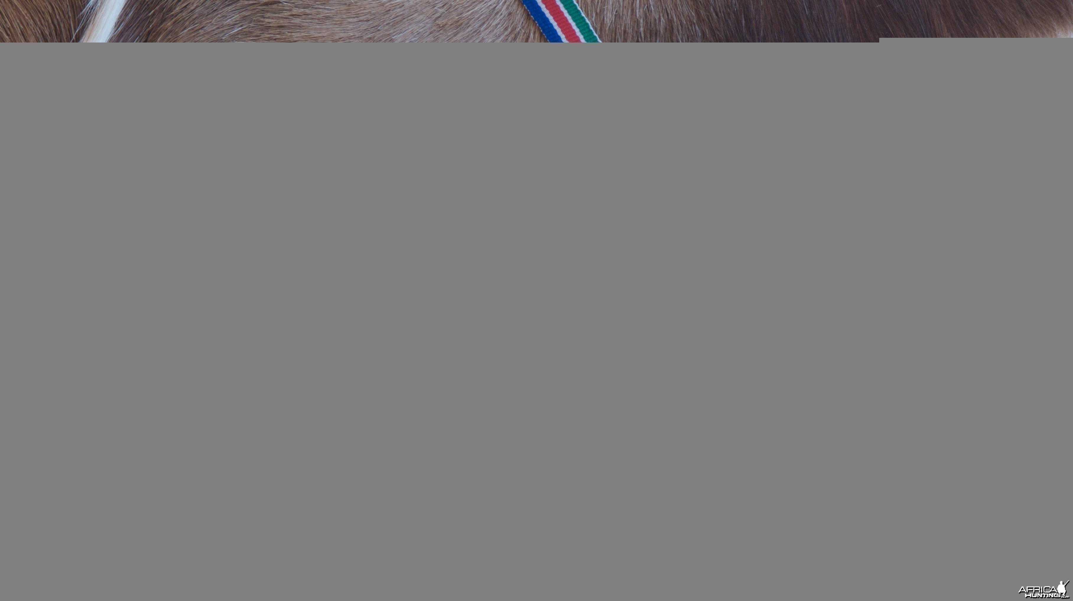 NAPHA medals