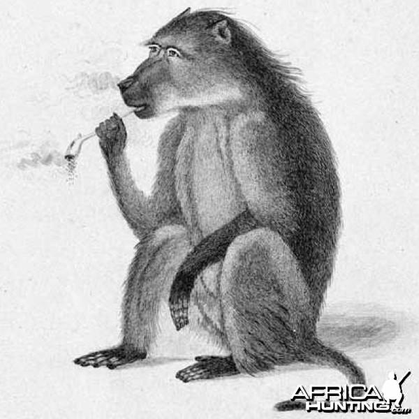 Smoking Baboon