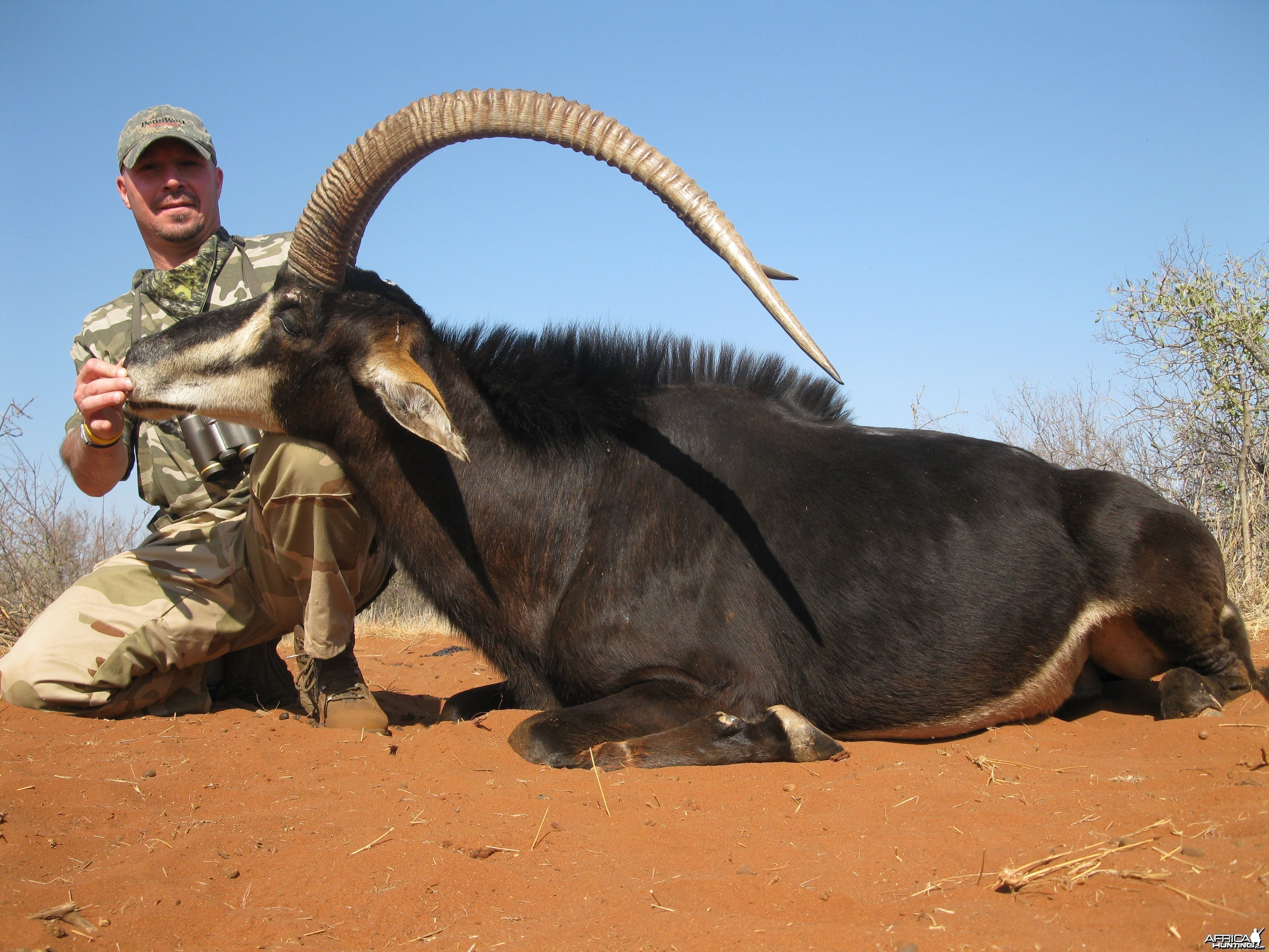 "2012 Sable, 42 1/2"", Limpopo"