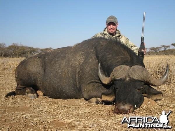 2012 Cape Buff, Limpopo