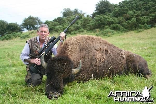 North American Bison - Taken in Liecester England