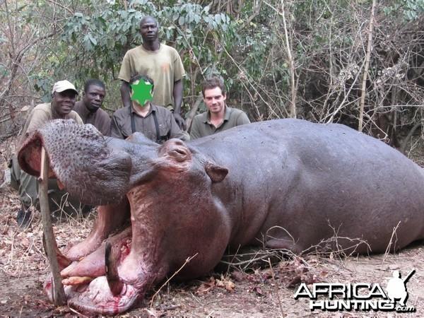 Hippo in the bako