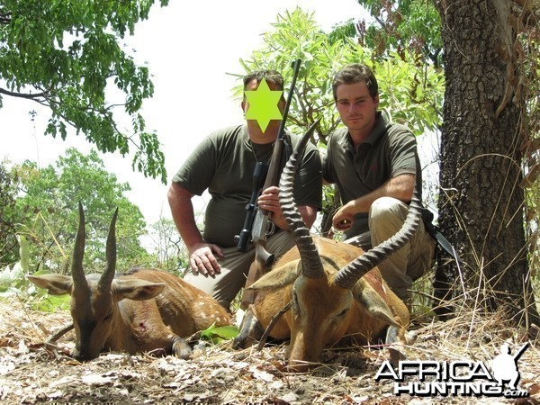 Buffon's Cob and Harnessed Bushbuck