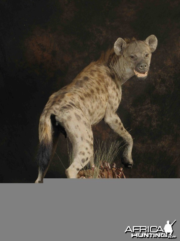 Hyena full mount