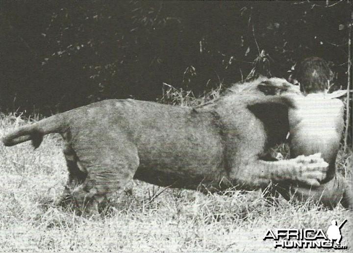 Lion mauling