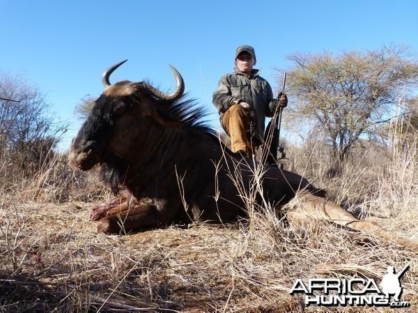 Ashton's Blue Wildebeest
