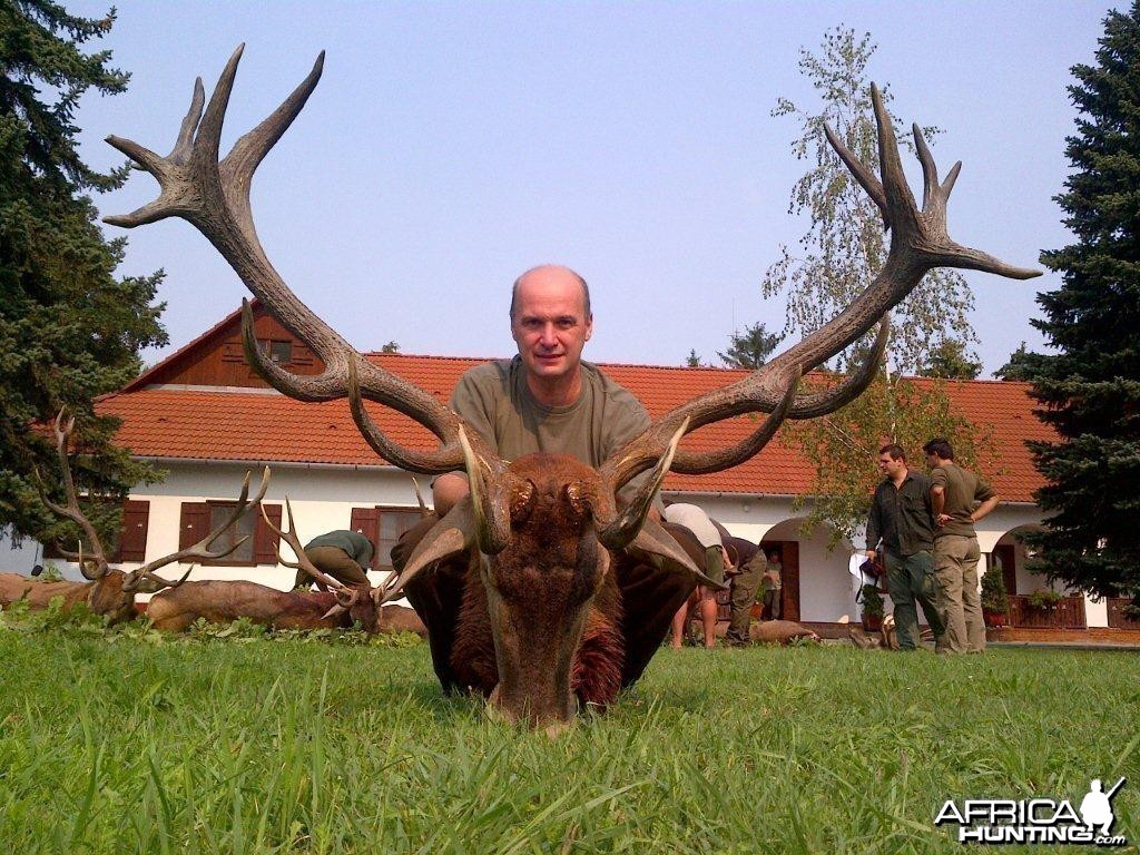 Red deer hunt in Europe