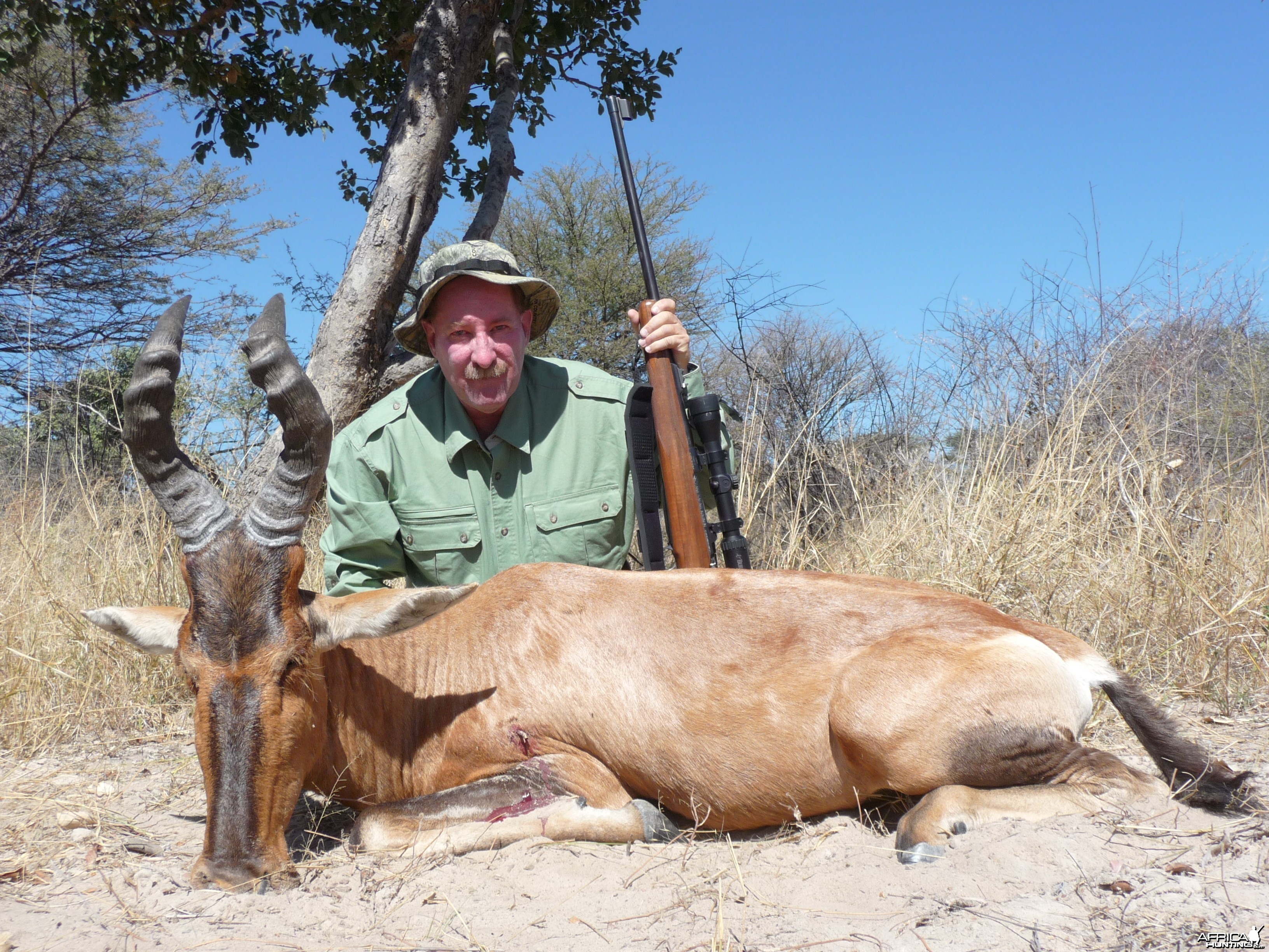 Red Hartebeest Nam 2012