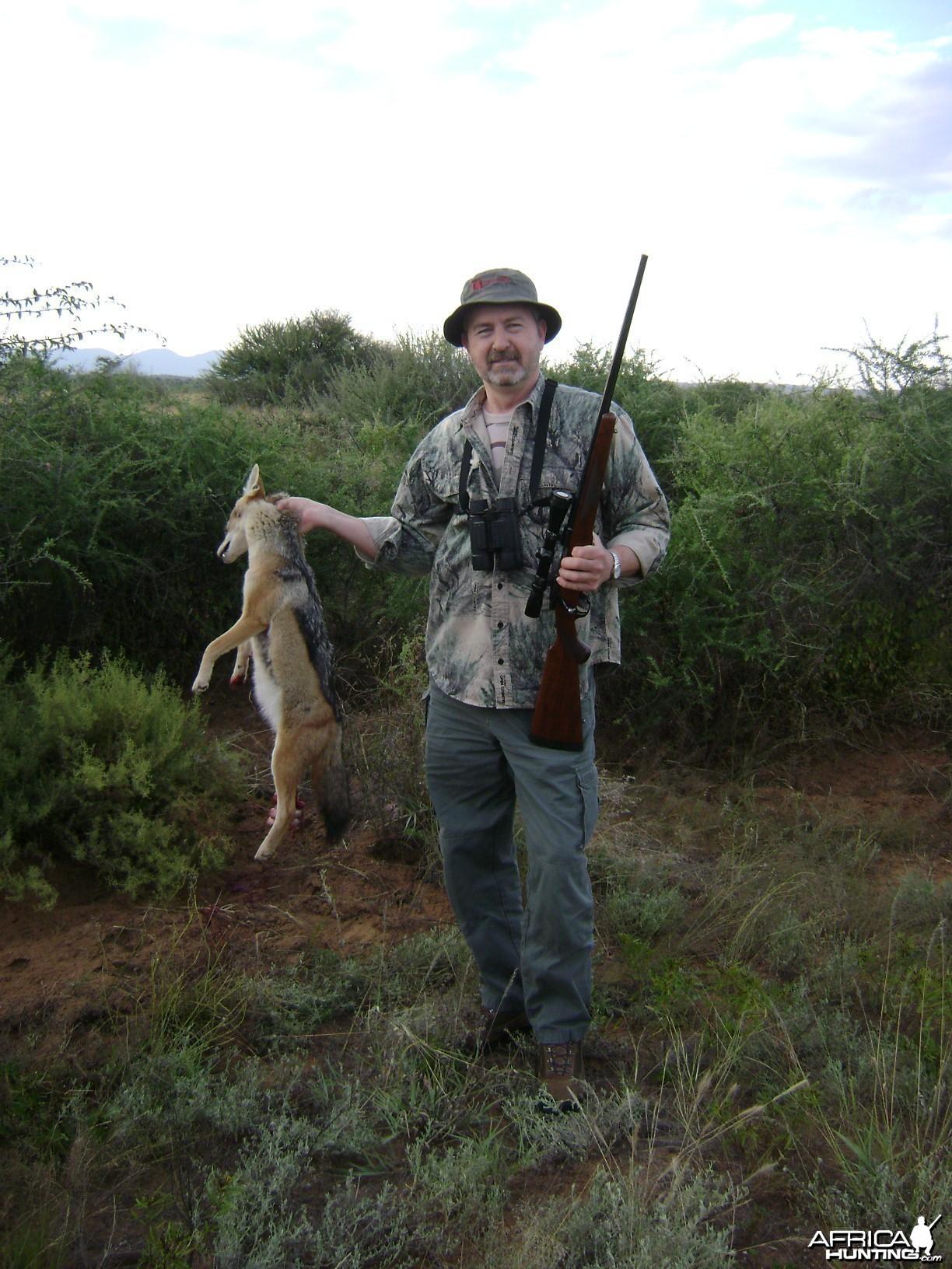 Jackal Namibia 2012