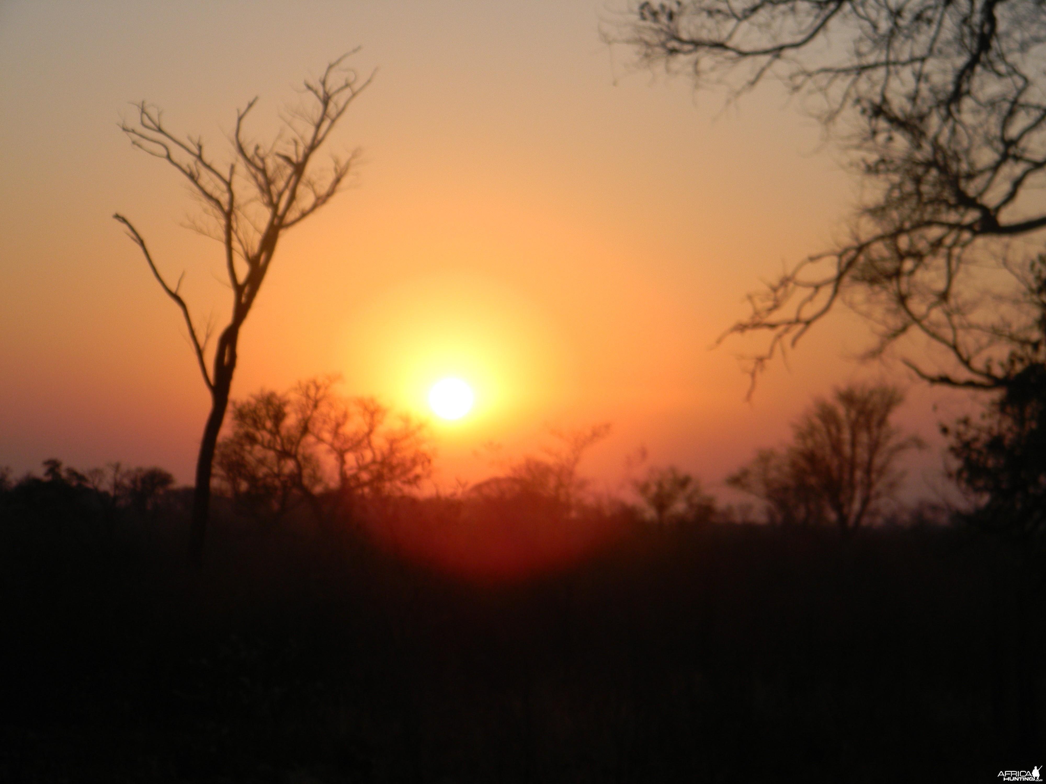 Zimbabwe elephant hunt