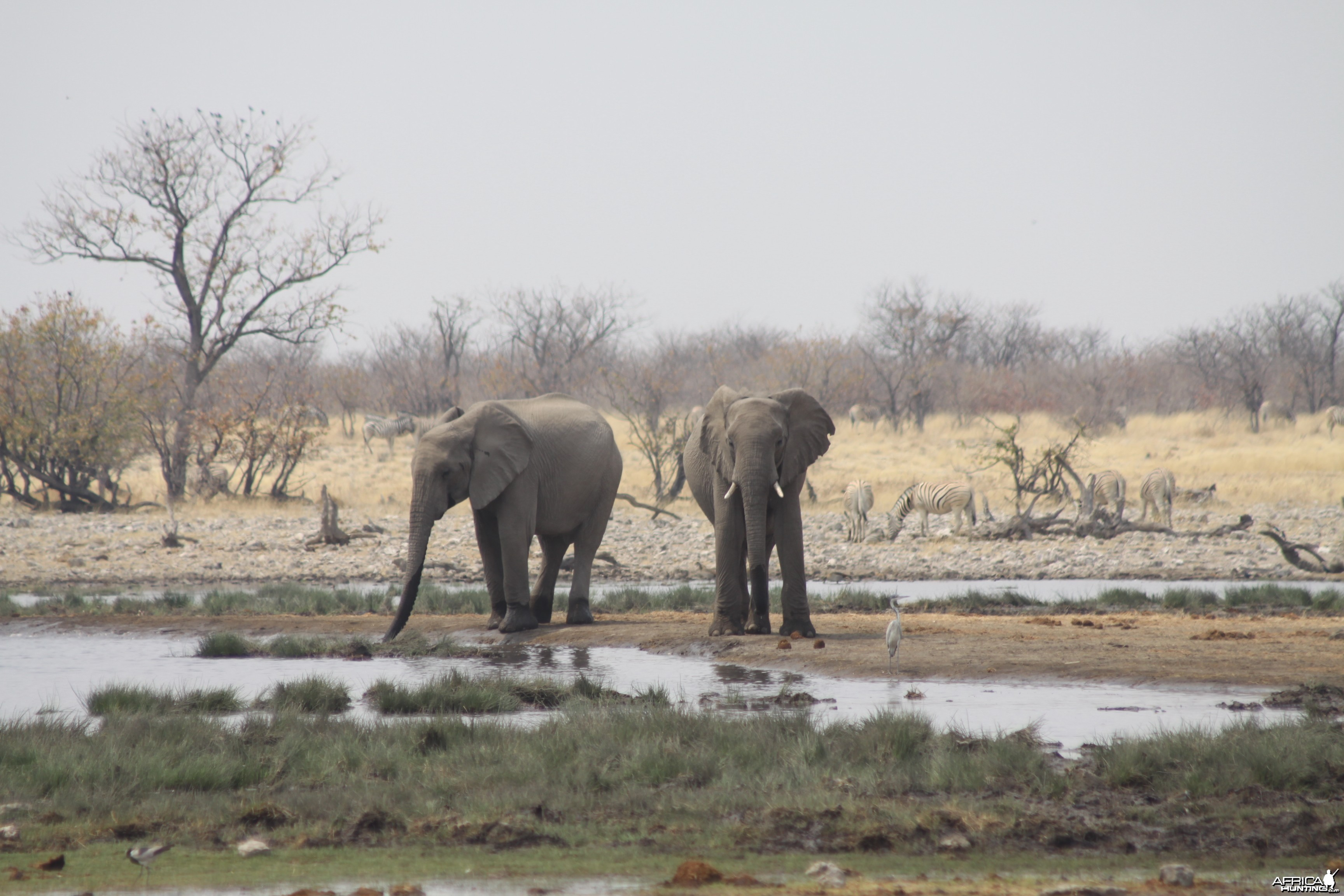 Etosha Elephant