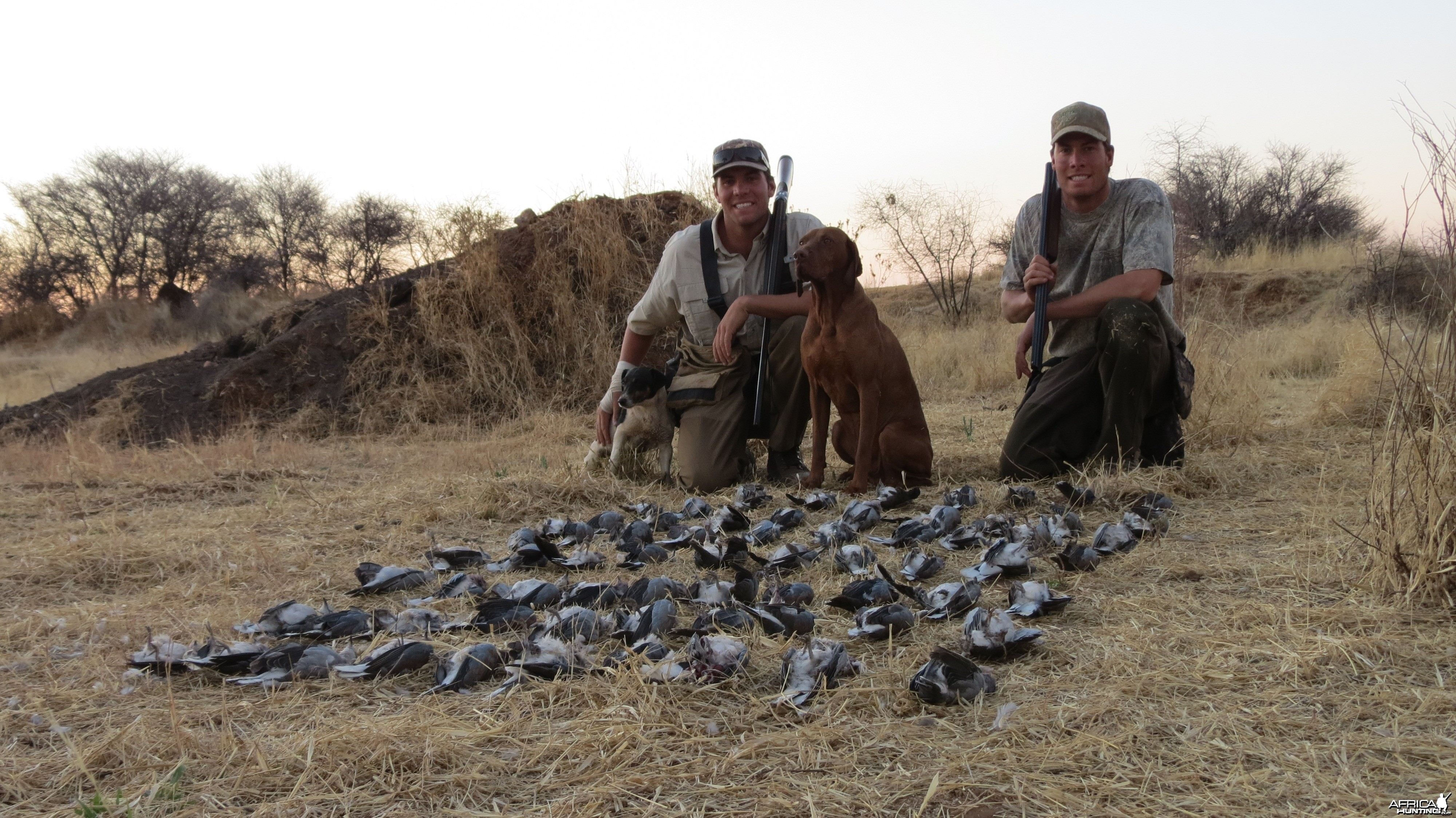 Doves hunted with Ozondjahe Hunting Safaris in Namibia