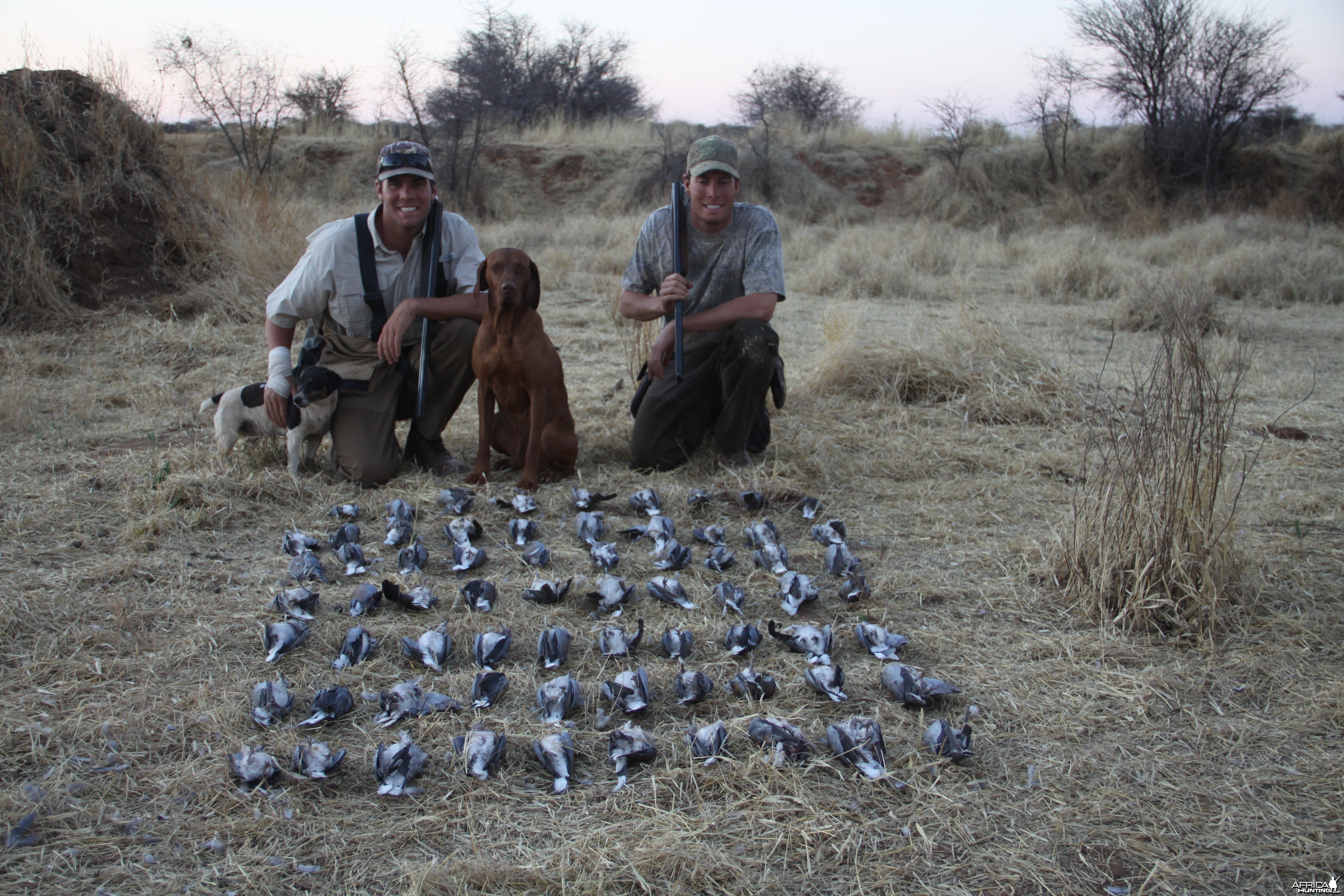Dove hunted with Ozondjahe Hunting Safaris in Namibia