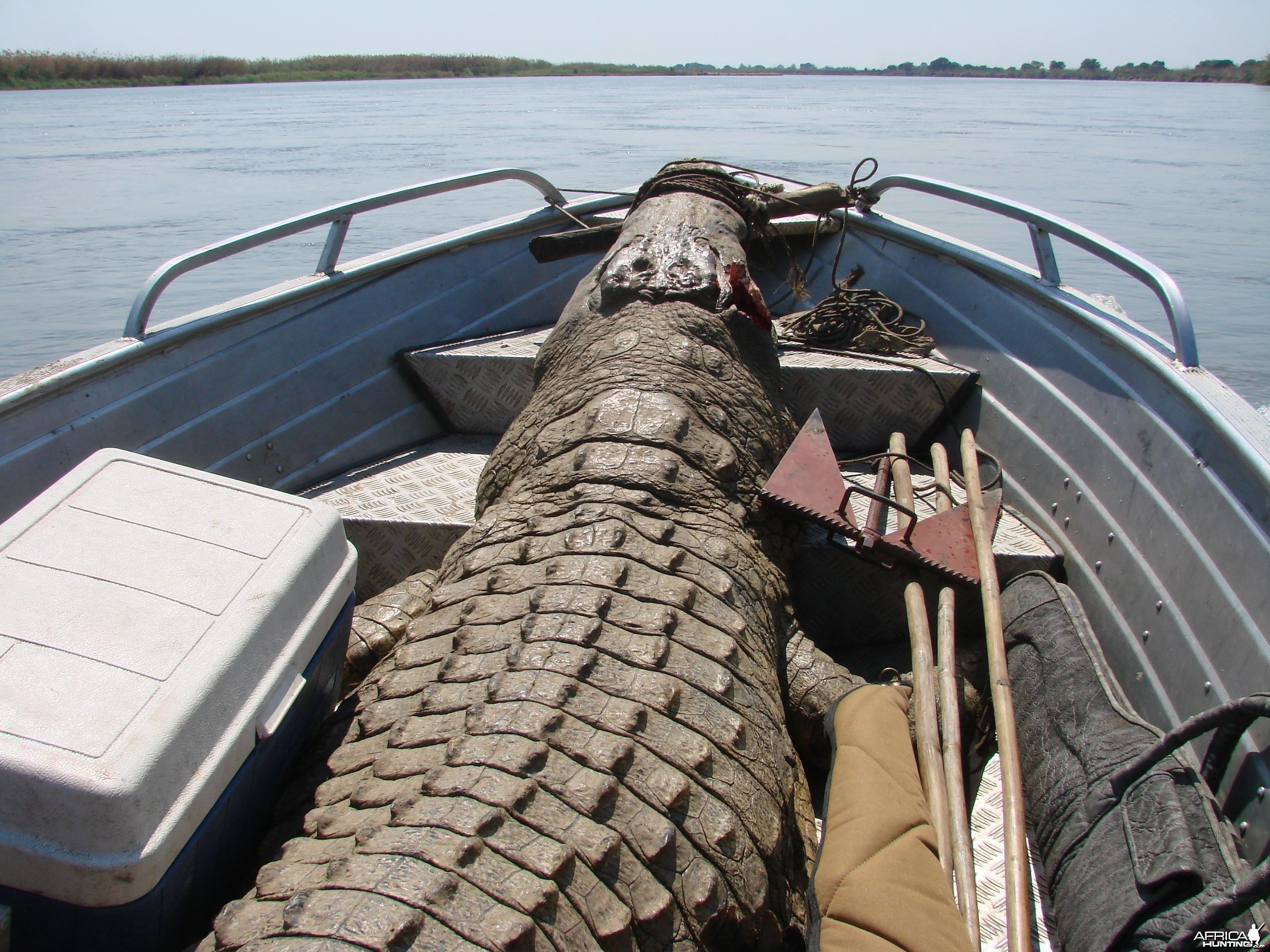 Croc Mozambique
