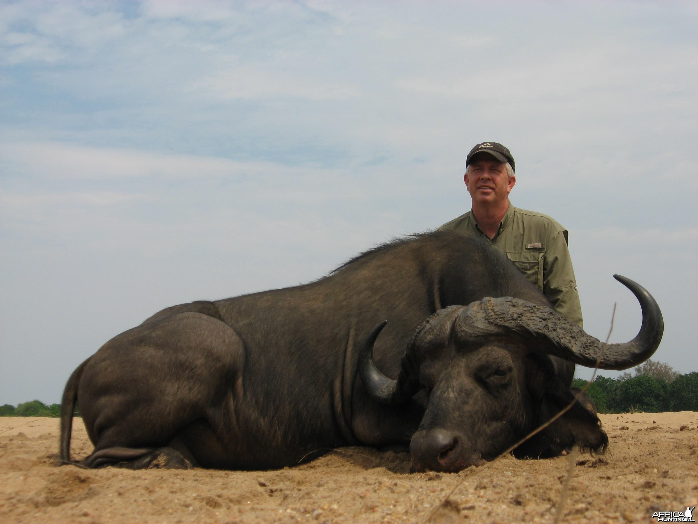 Buffalo - Zimbabwe