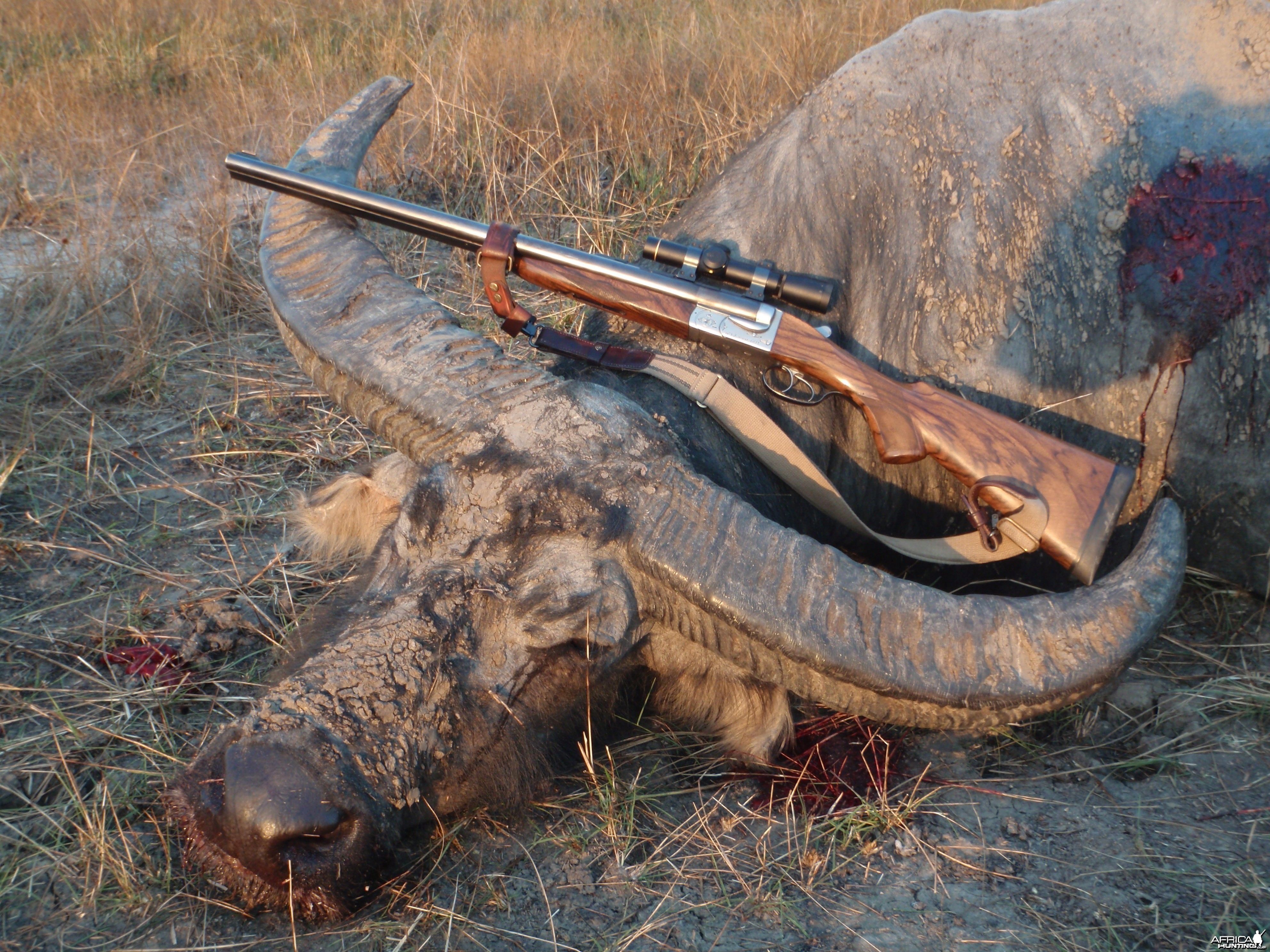 Hunting Asiatic Buffalo in Northern Australia