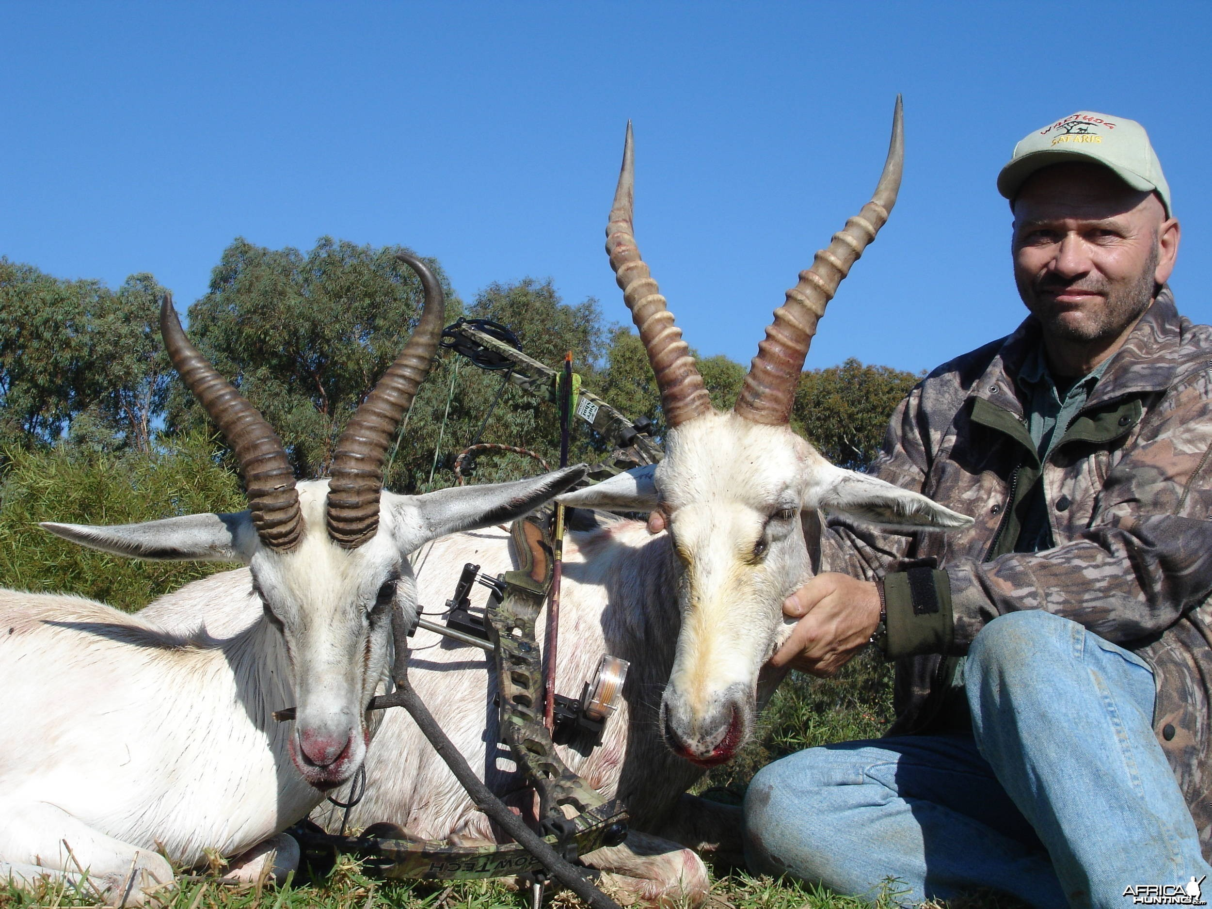 White Springbok and Blesbok with bow, took with Warthog Safaris