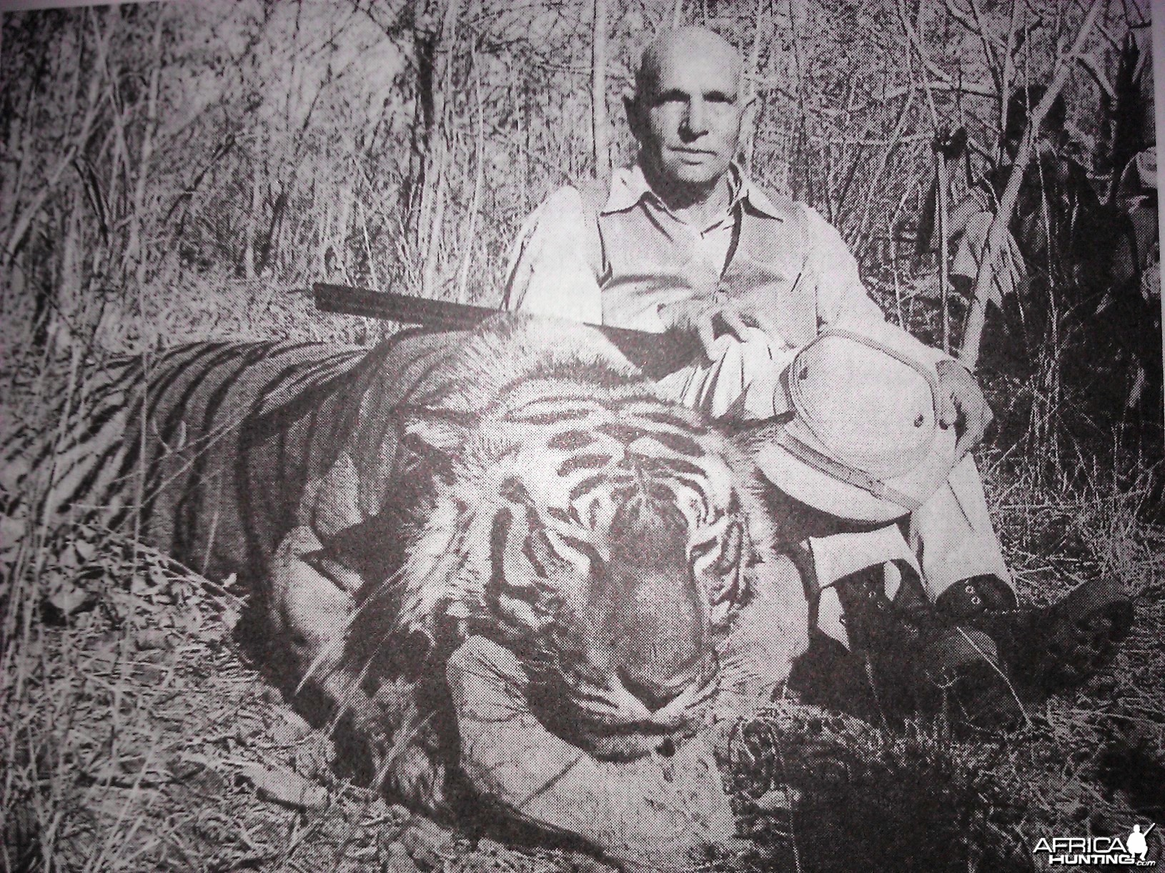 Tiger hunting picture from the British Raj Era