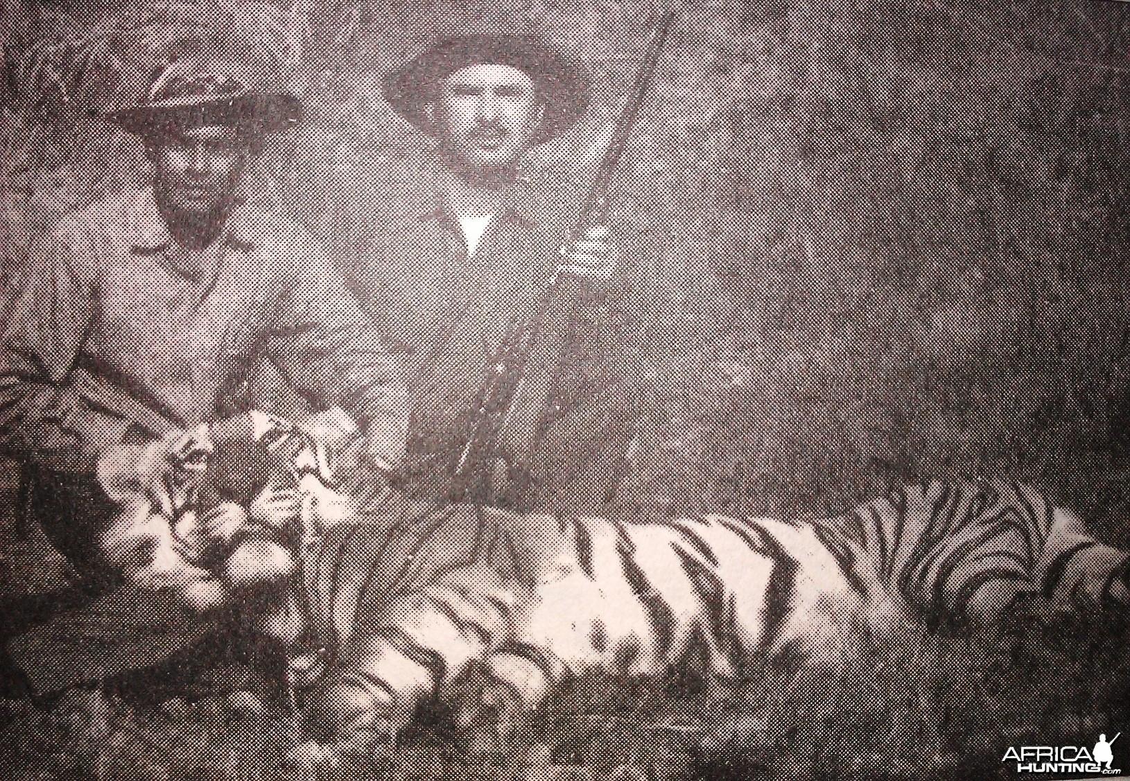 Hunting Tiger India