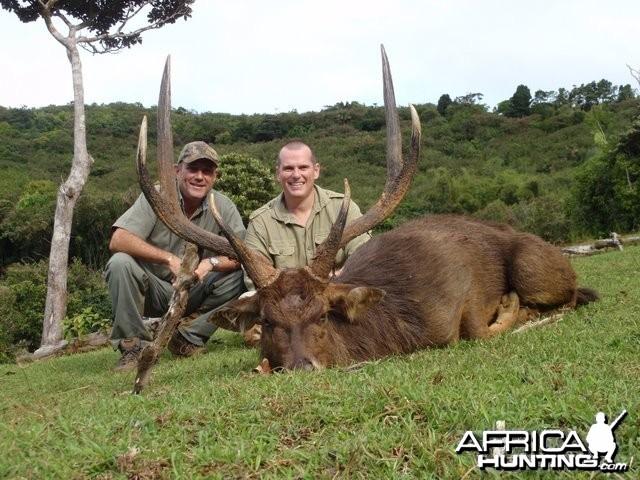 Rusa deer of 35'' in Mauritius