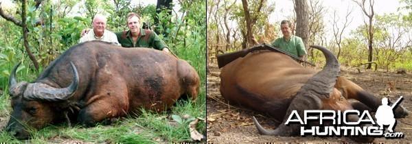 Central African Buffalo