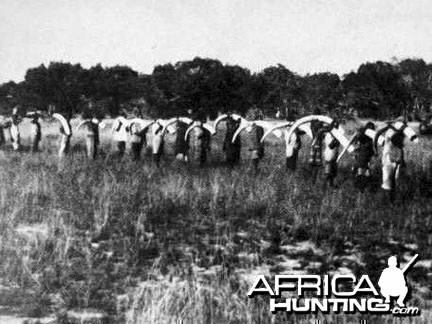 African Elephant Hunt