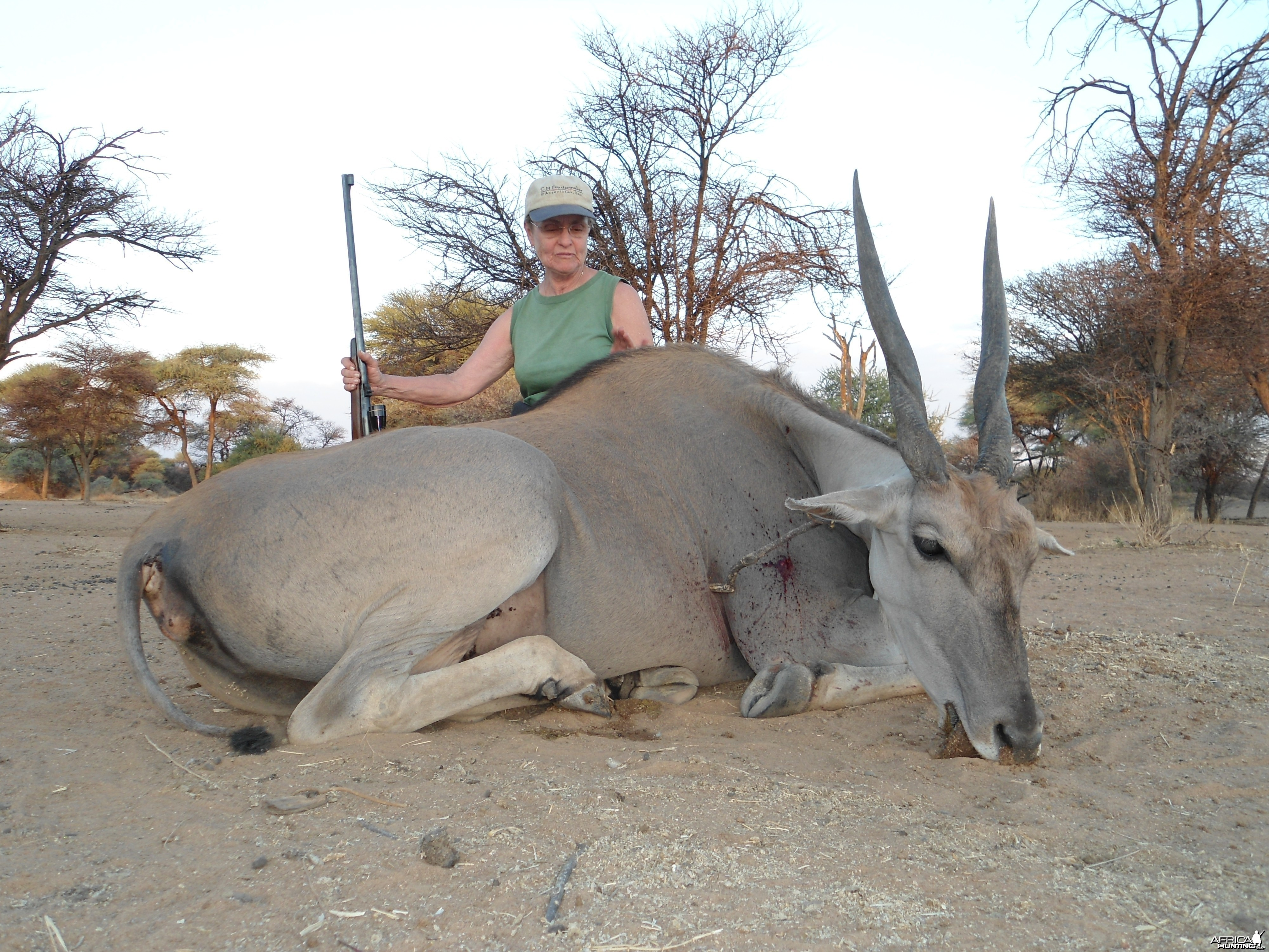 Hunting Cape Eland Female in Namibia
