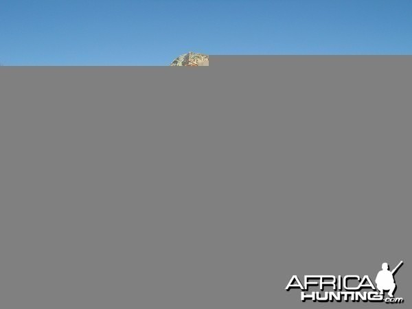 Hunting Damara Dik-Dik in Namibia