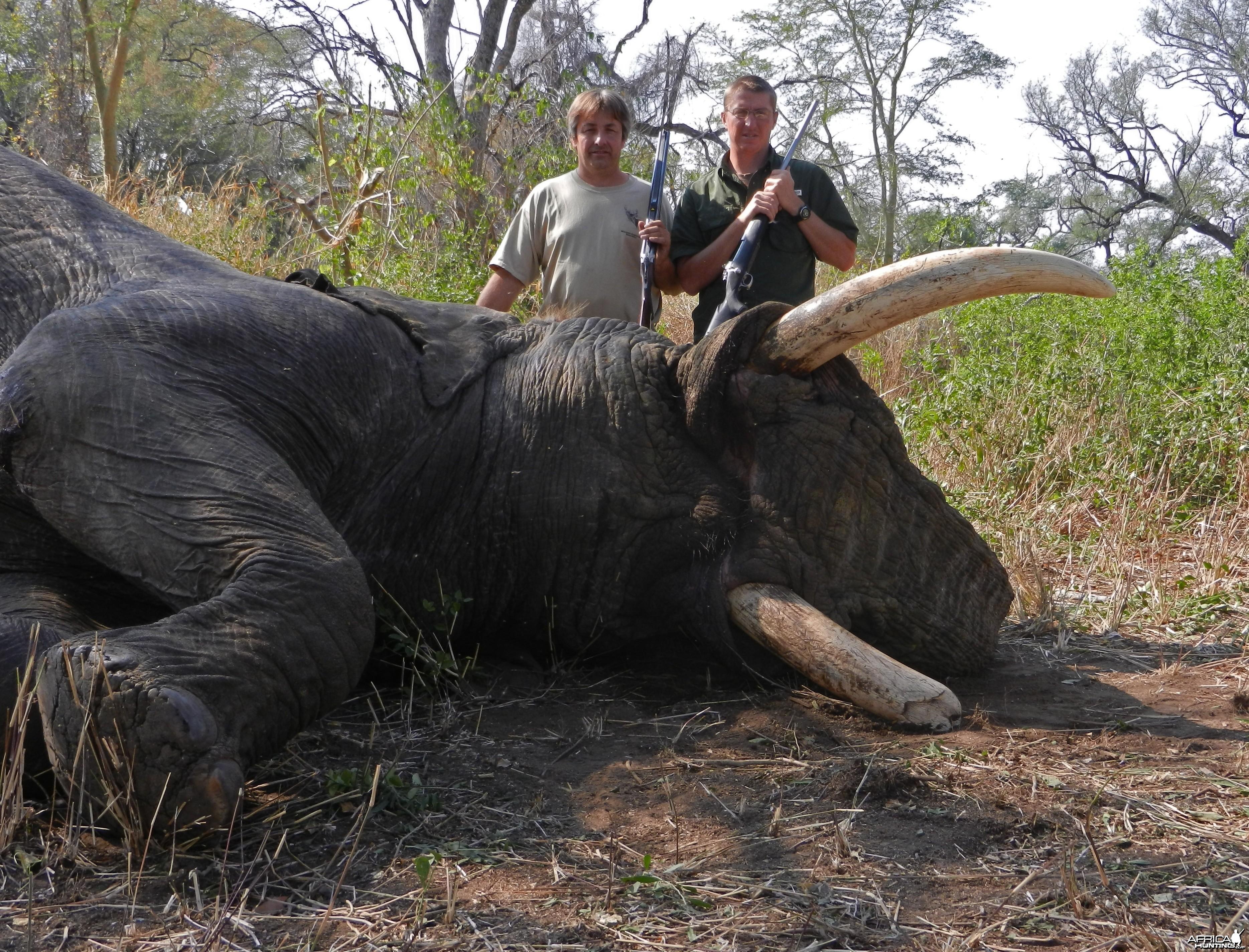 85lb Elephant 2012