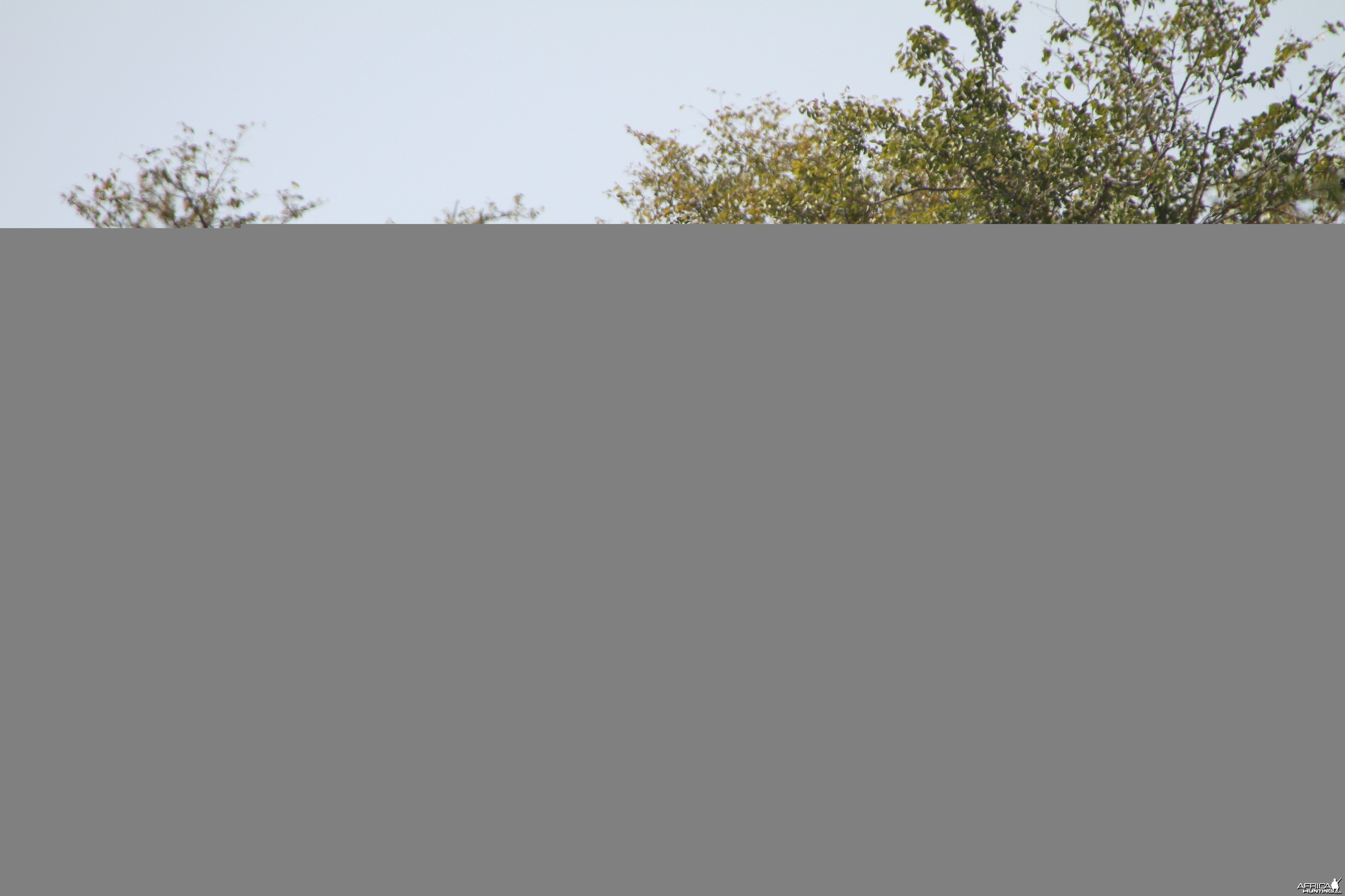 Greater Kudu at Etosha National Park