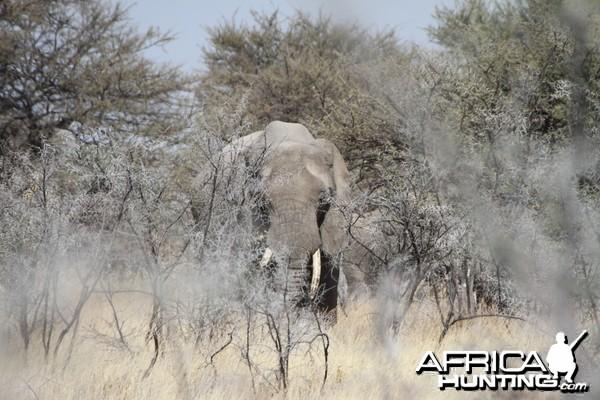 Elephant at Etosha National Park