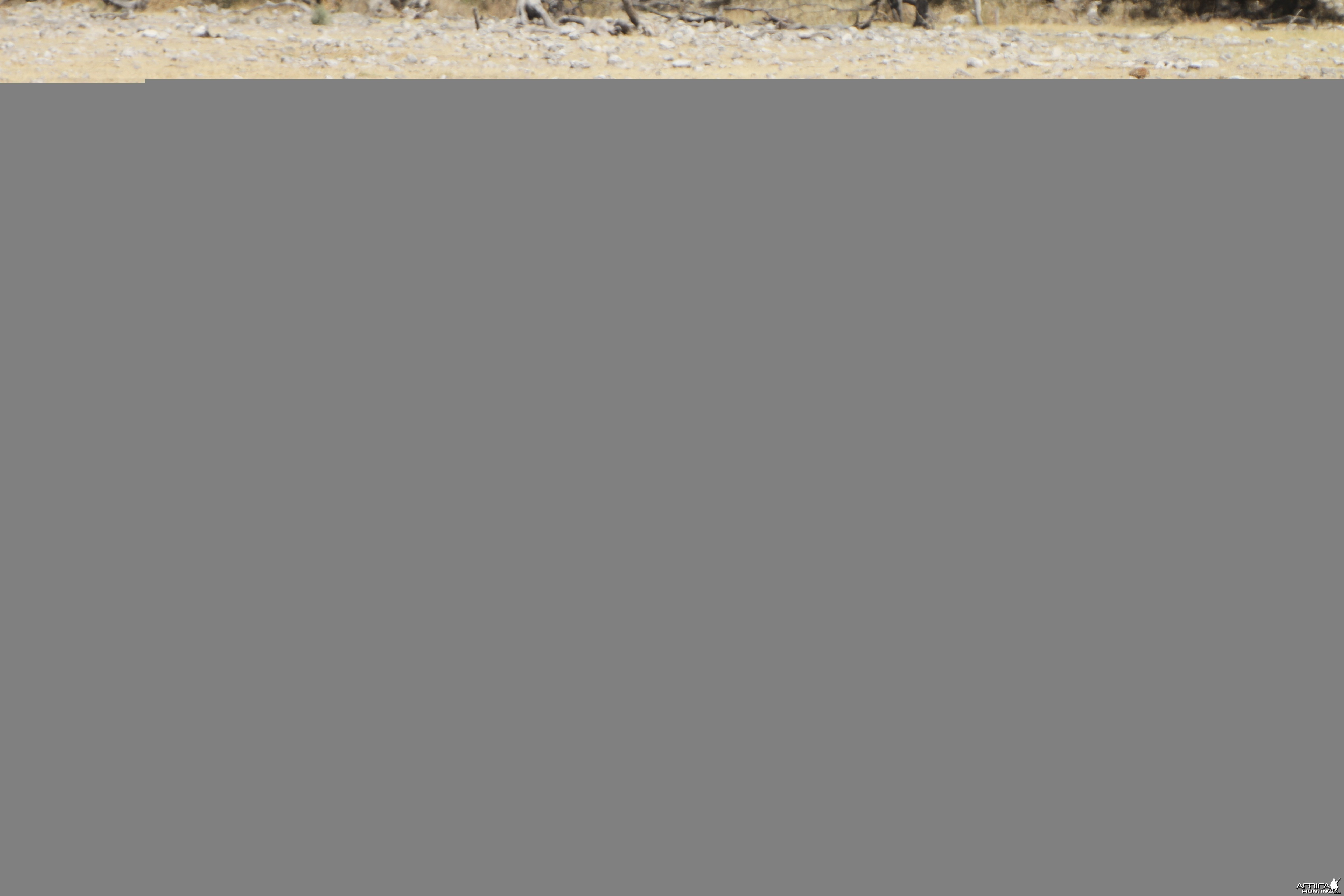Cape Eland at Etosha National Park