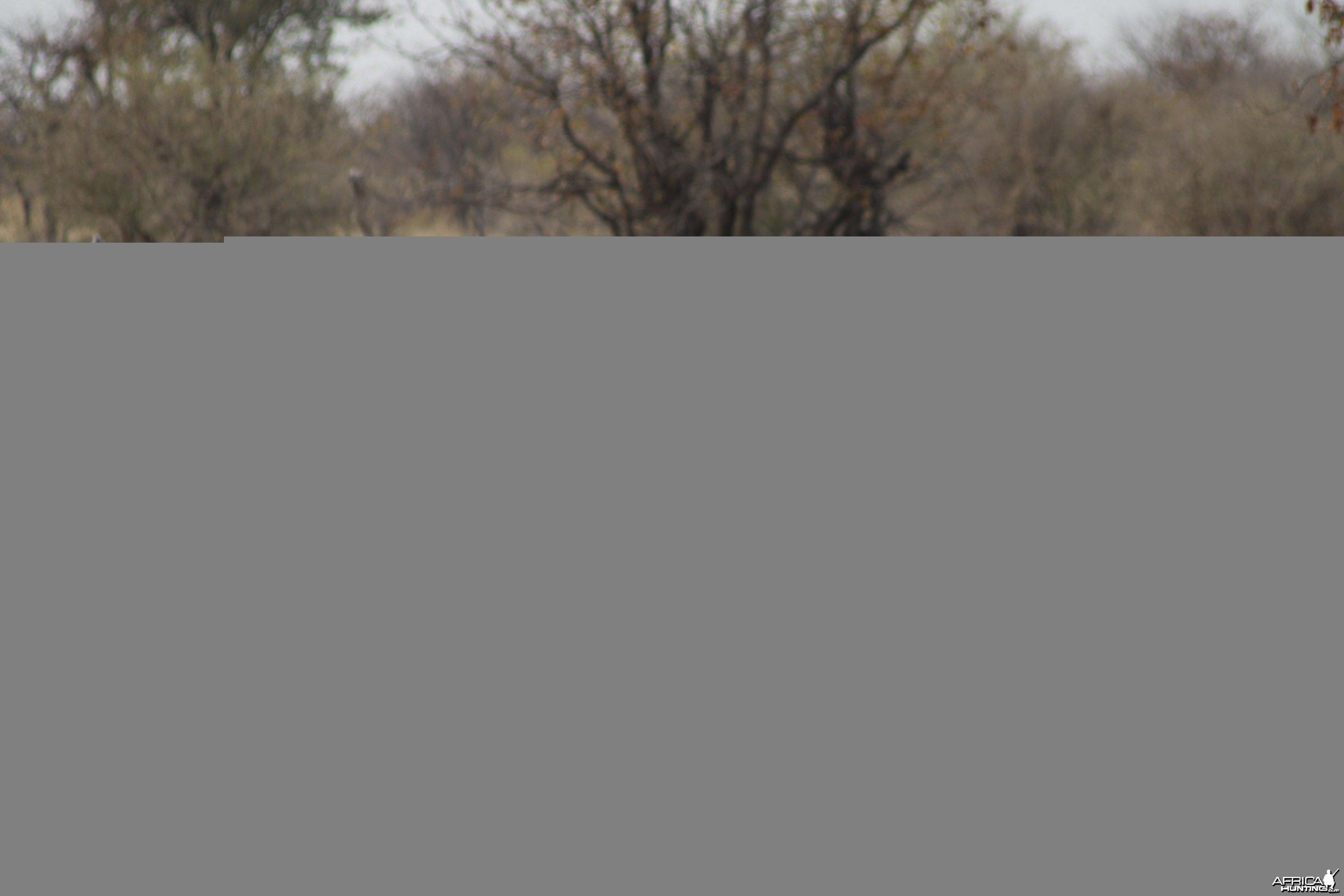 Red Hartebeest at Etosha National Park