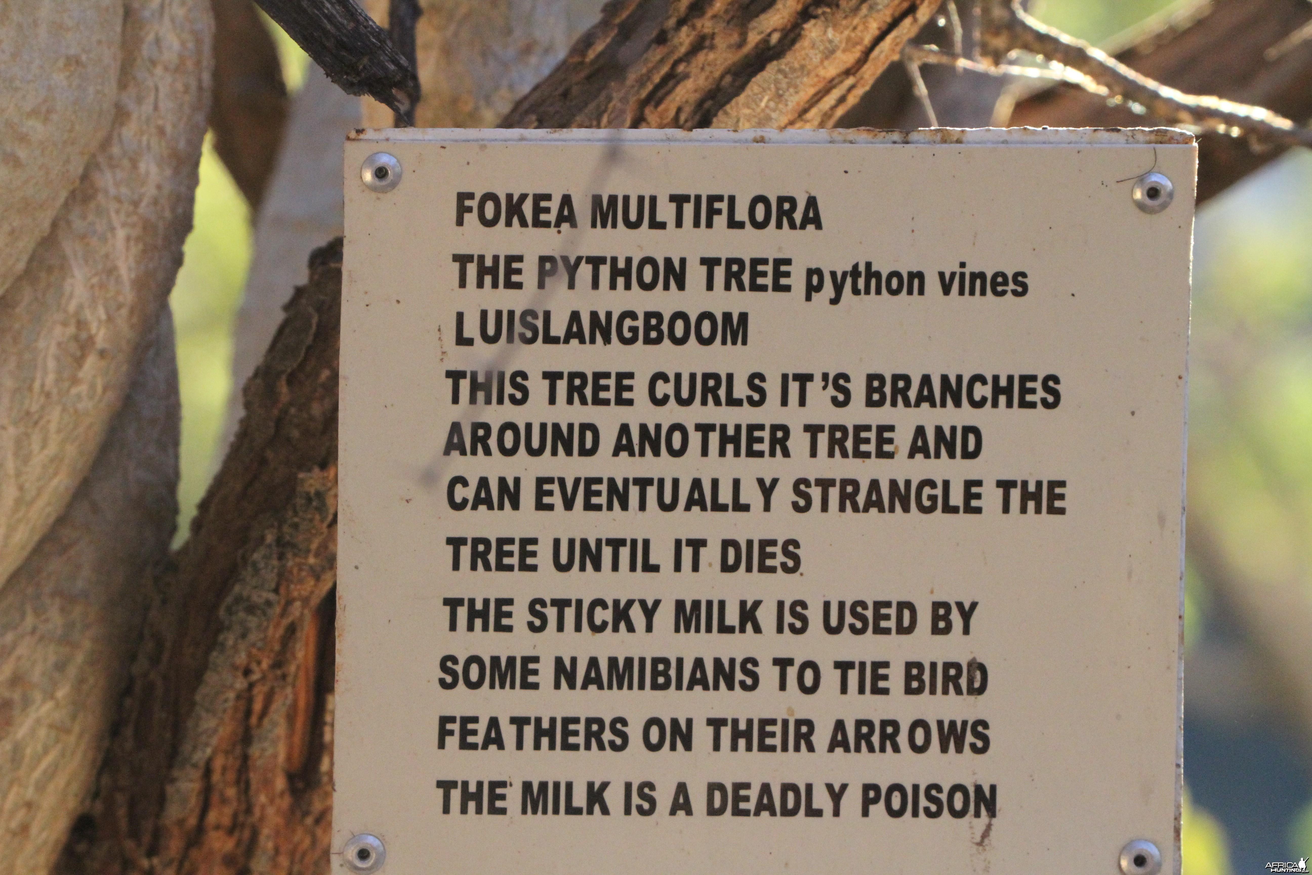 Tree at Otjikoto Lake in Namibia