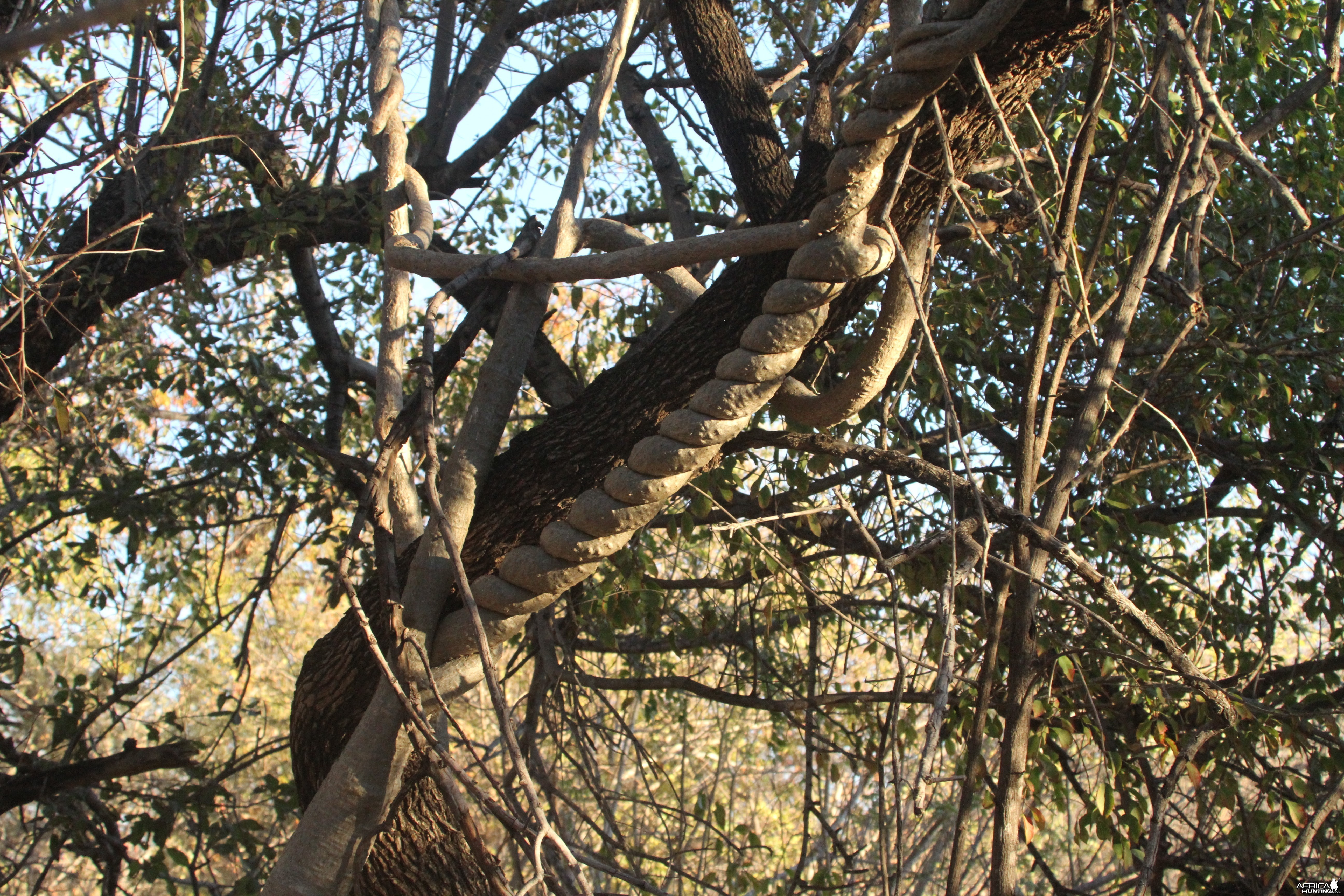 Tree at Otjikoto Lake in Namibia