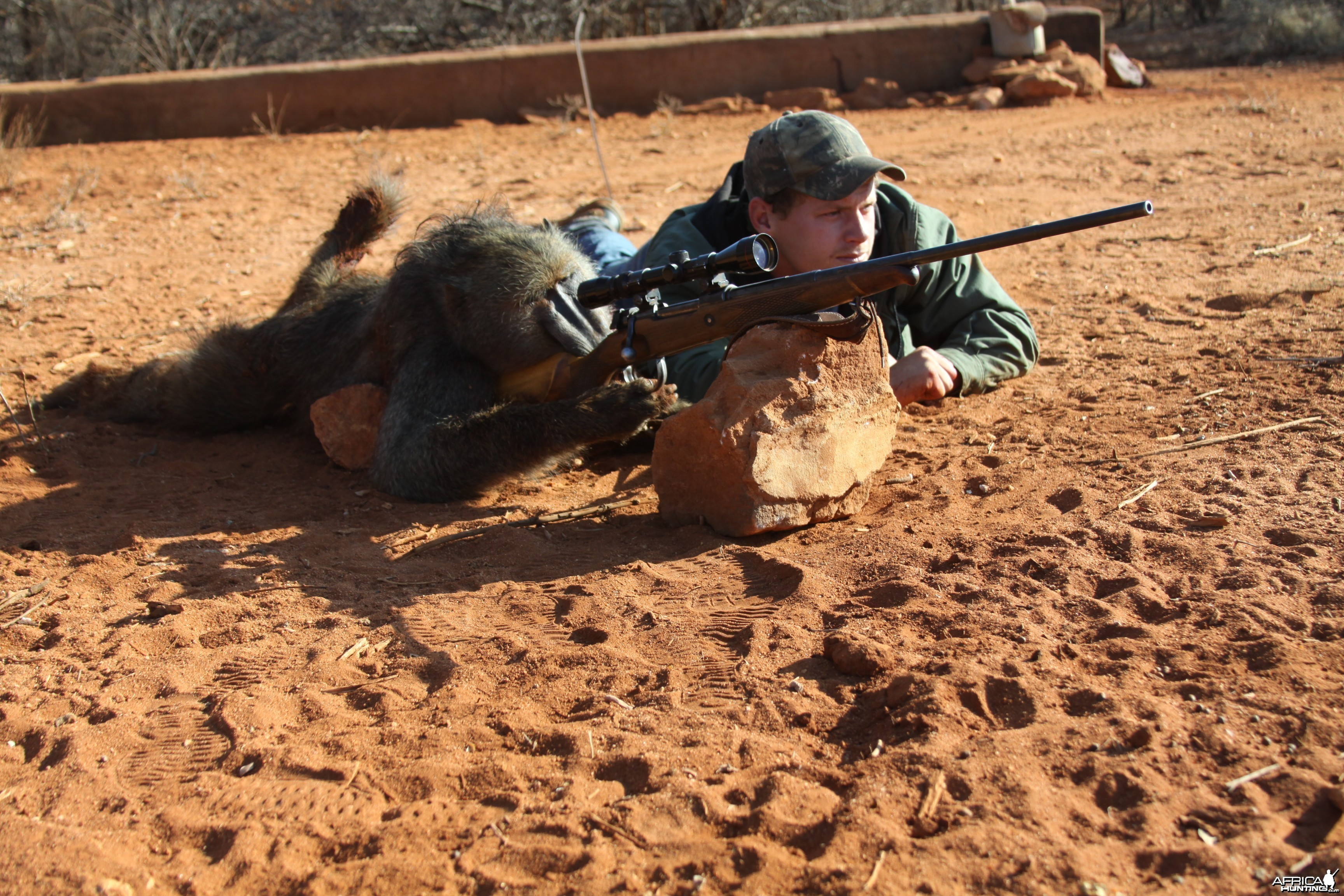 Shooting Baboon