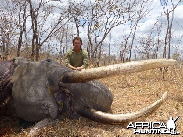 Elephant Selous 82 pounds, 2m05