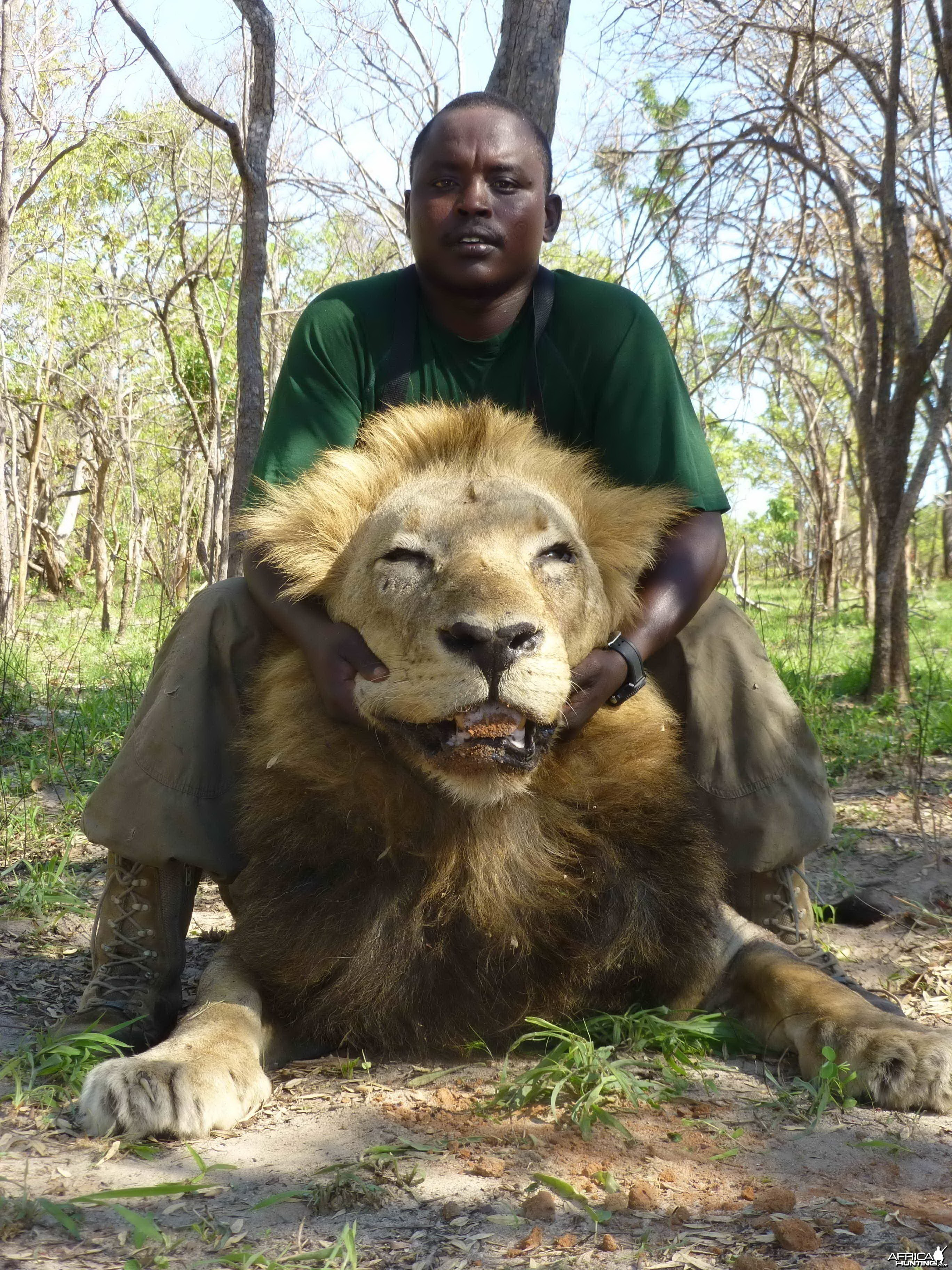 Lion Selous 2012