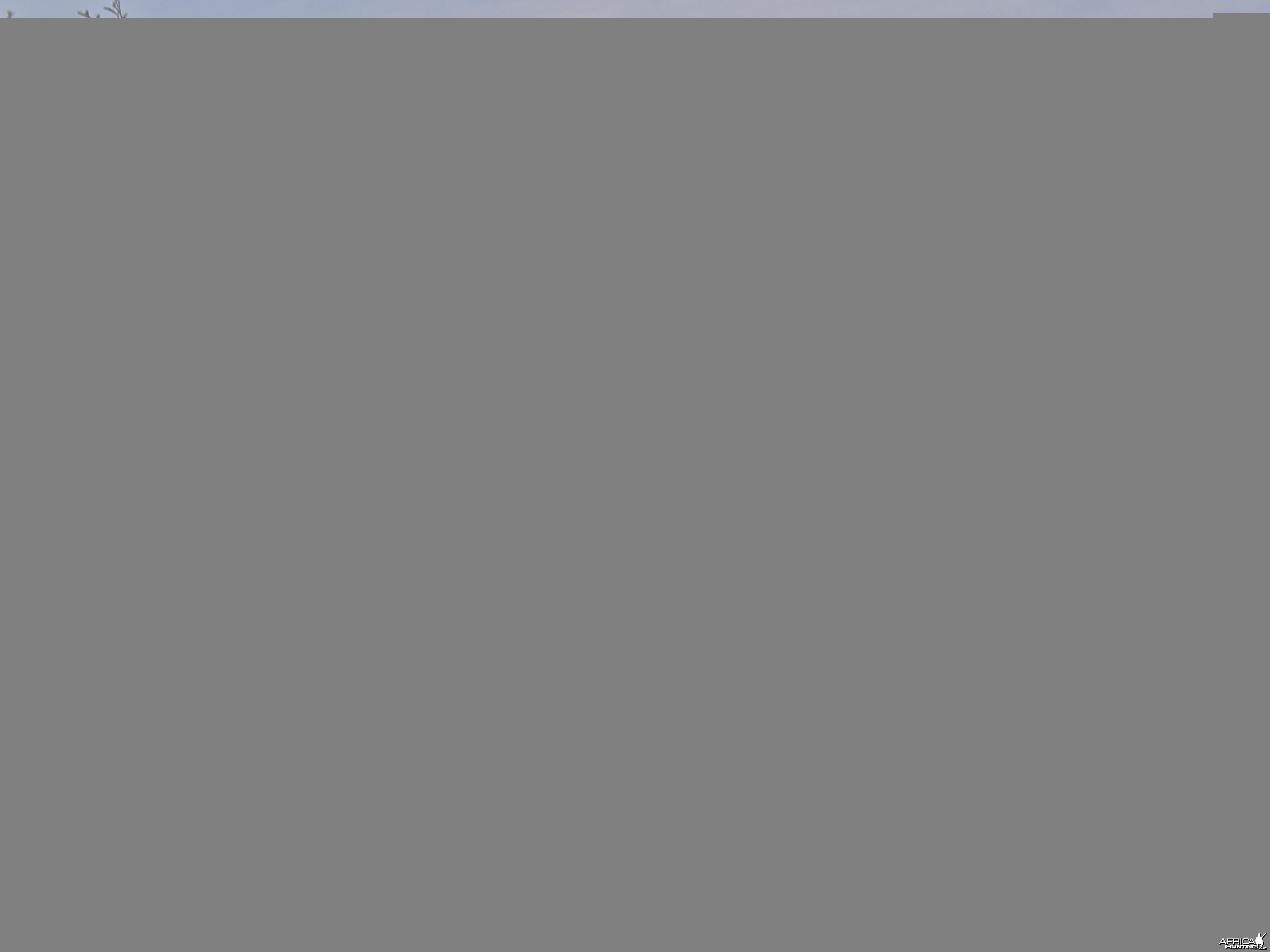 Hunting Kirk Dik-Dik