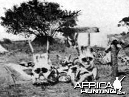 Elephant  Skulls