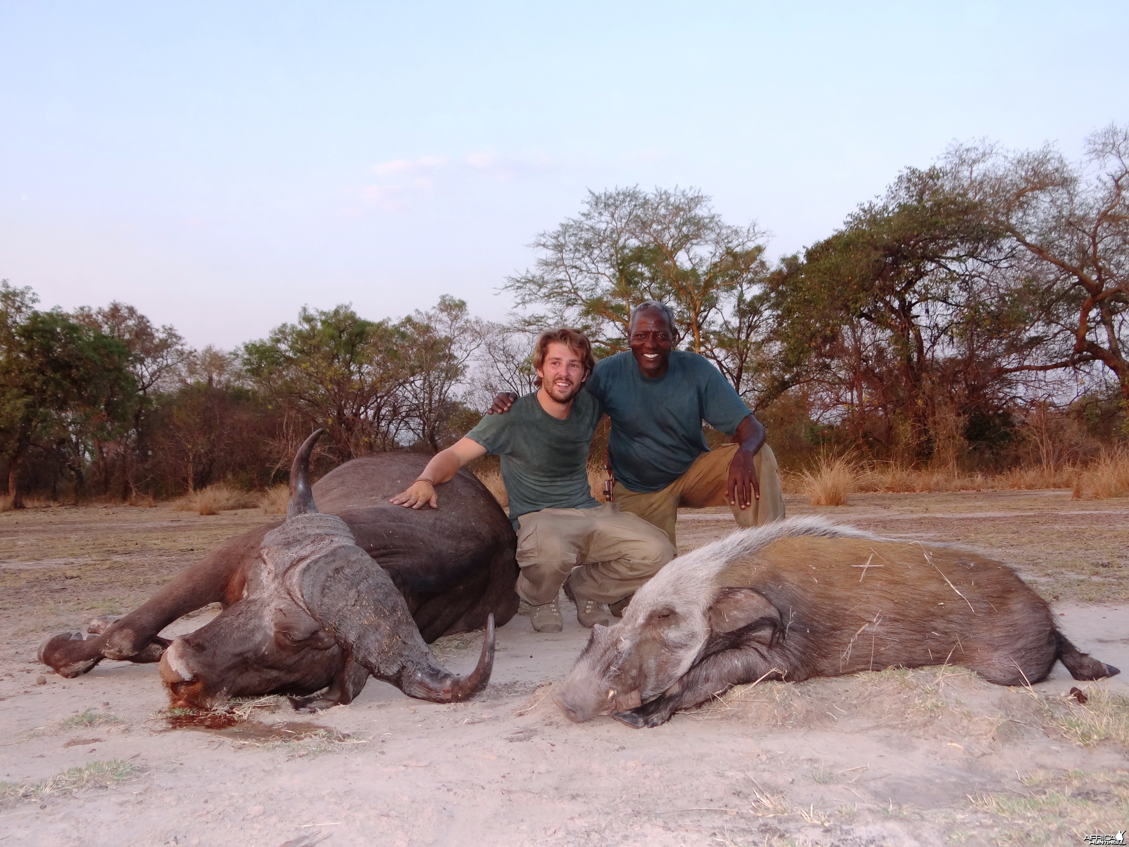 Hunting Buffalo and Bushpig