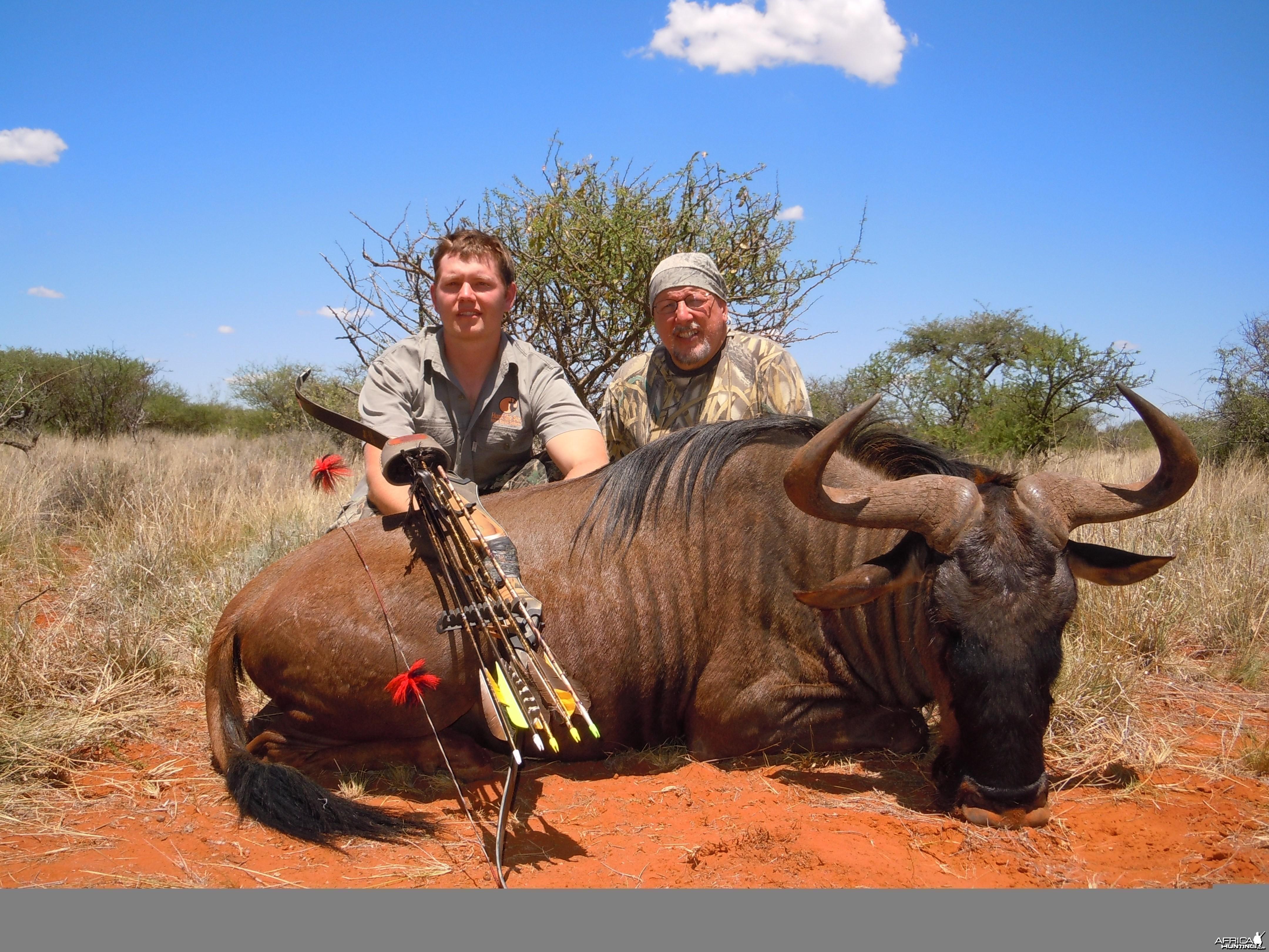 Wildebeest Bull