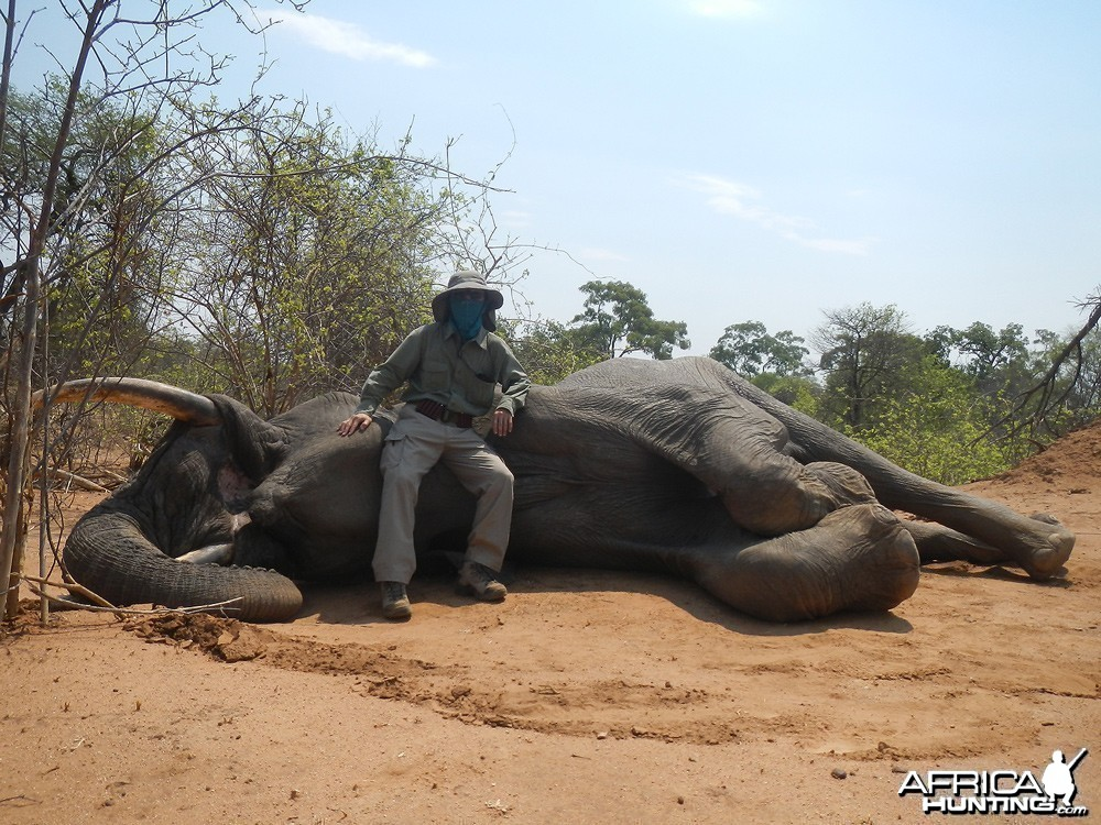 Zimbabwe 2012 2nd Elephant
