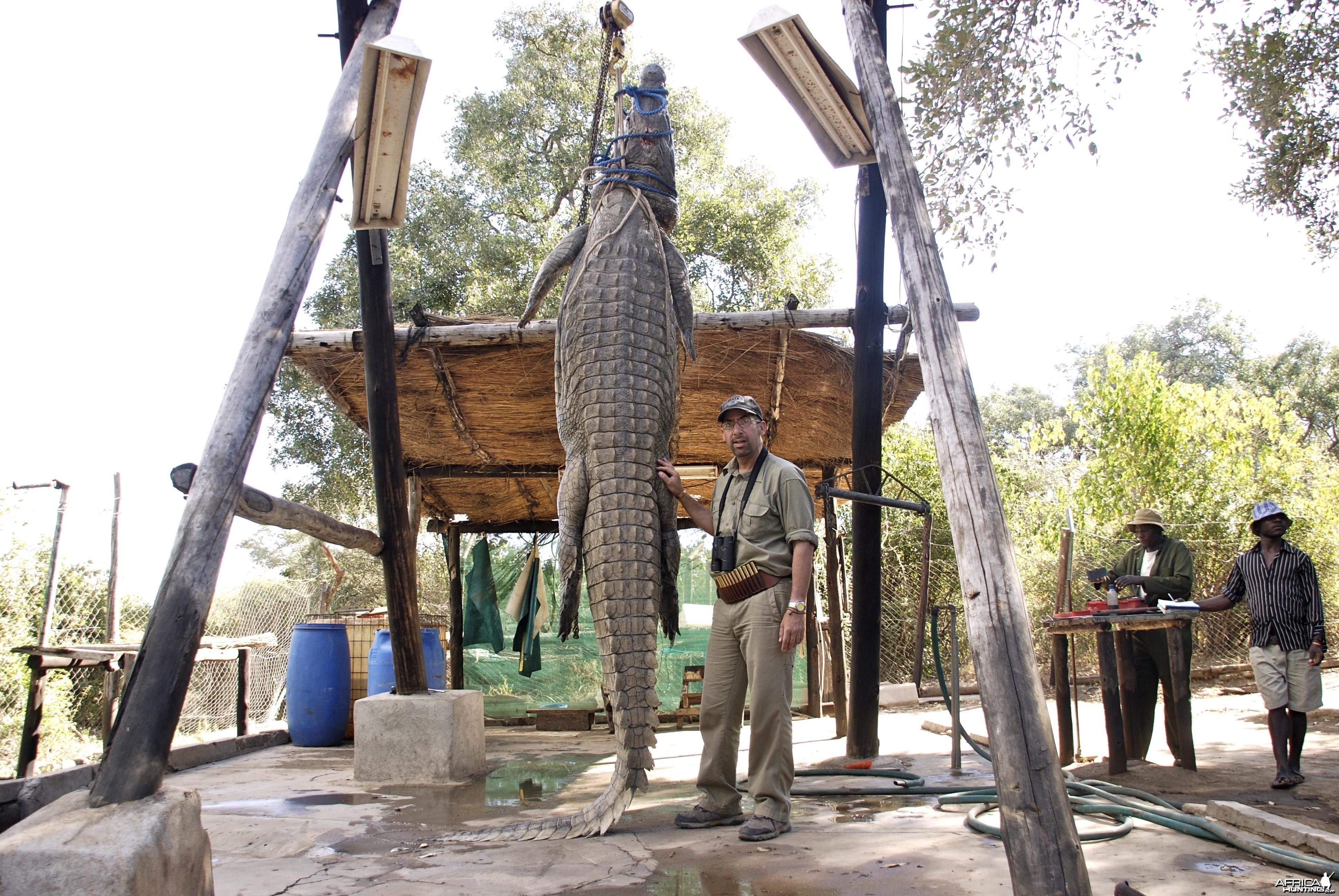 "Croc 15'2"" Zimbabwe 2012"